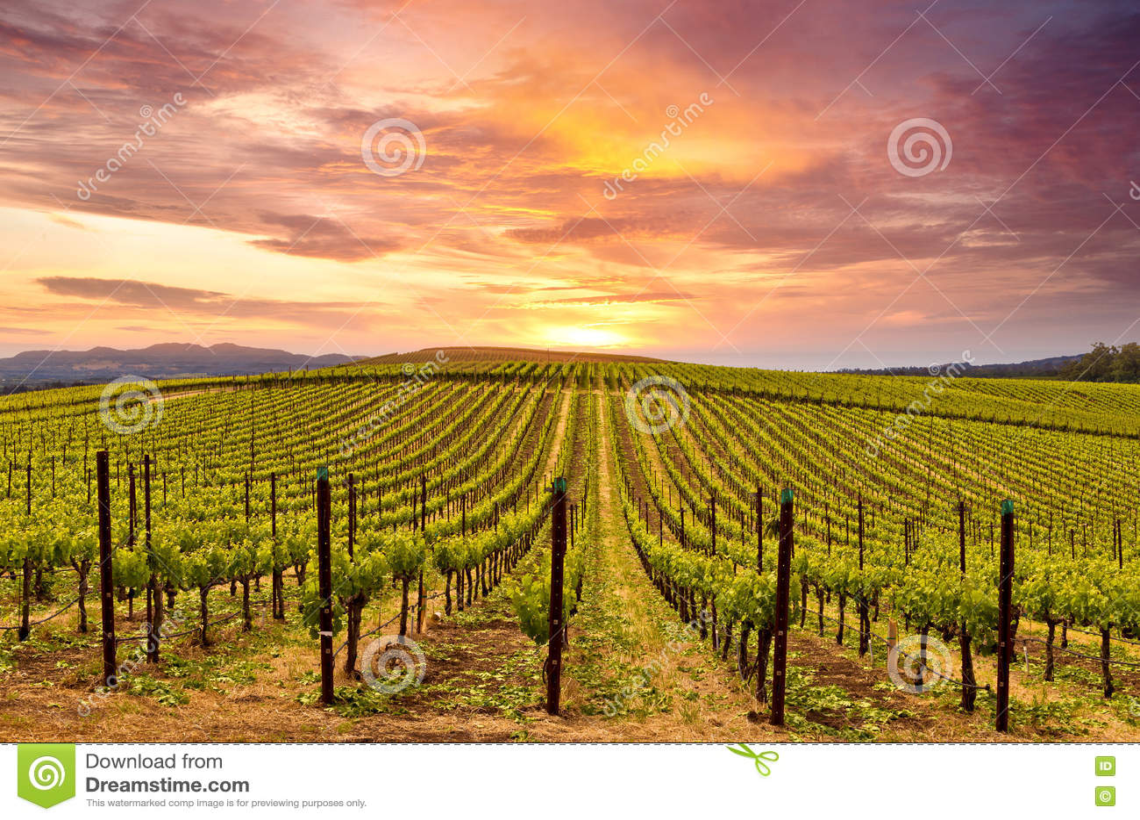 Napa Valley Vineyards Spring Sunset