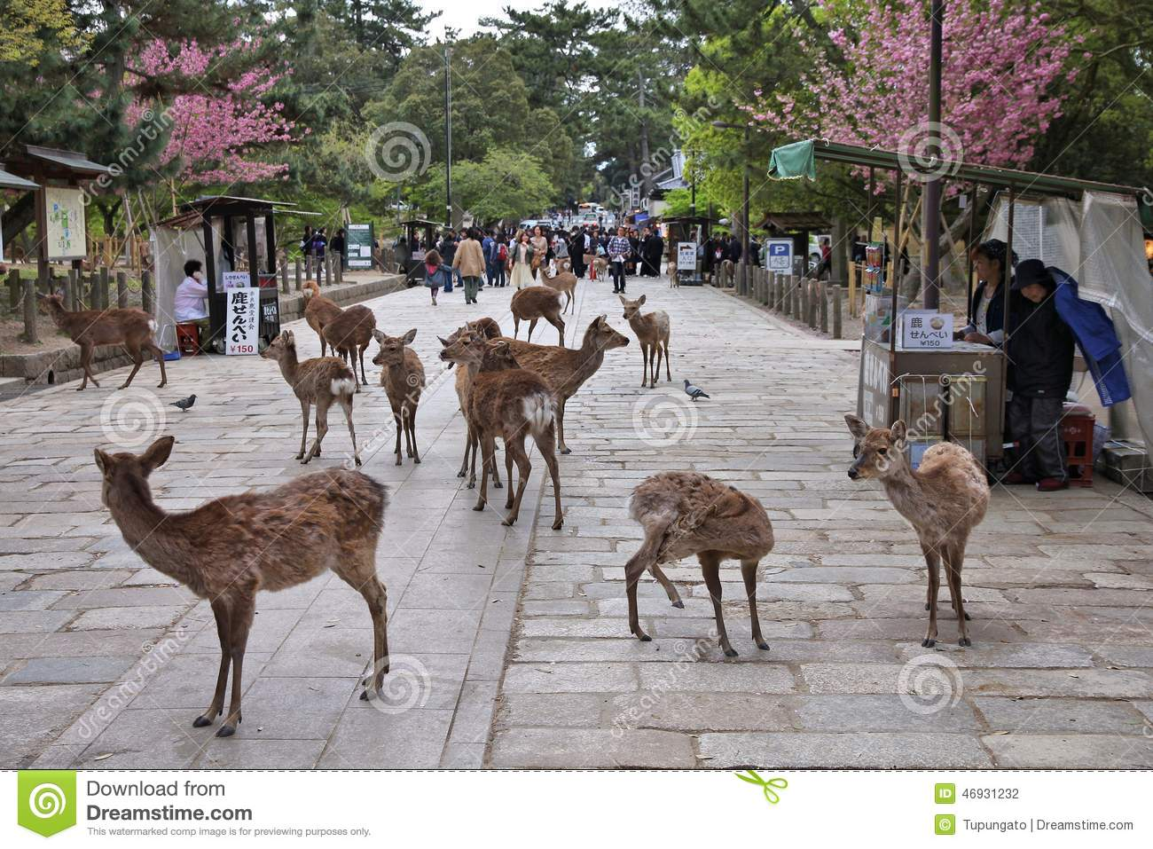Murou Temple,uda City,nara,tourism Of Japan Stock Photo, Picture ...
