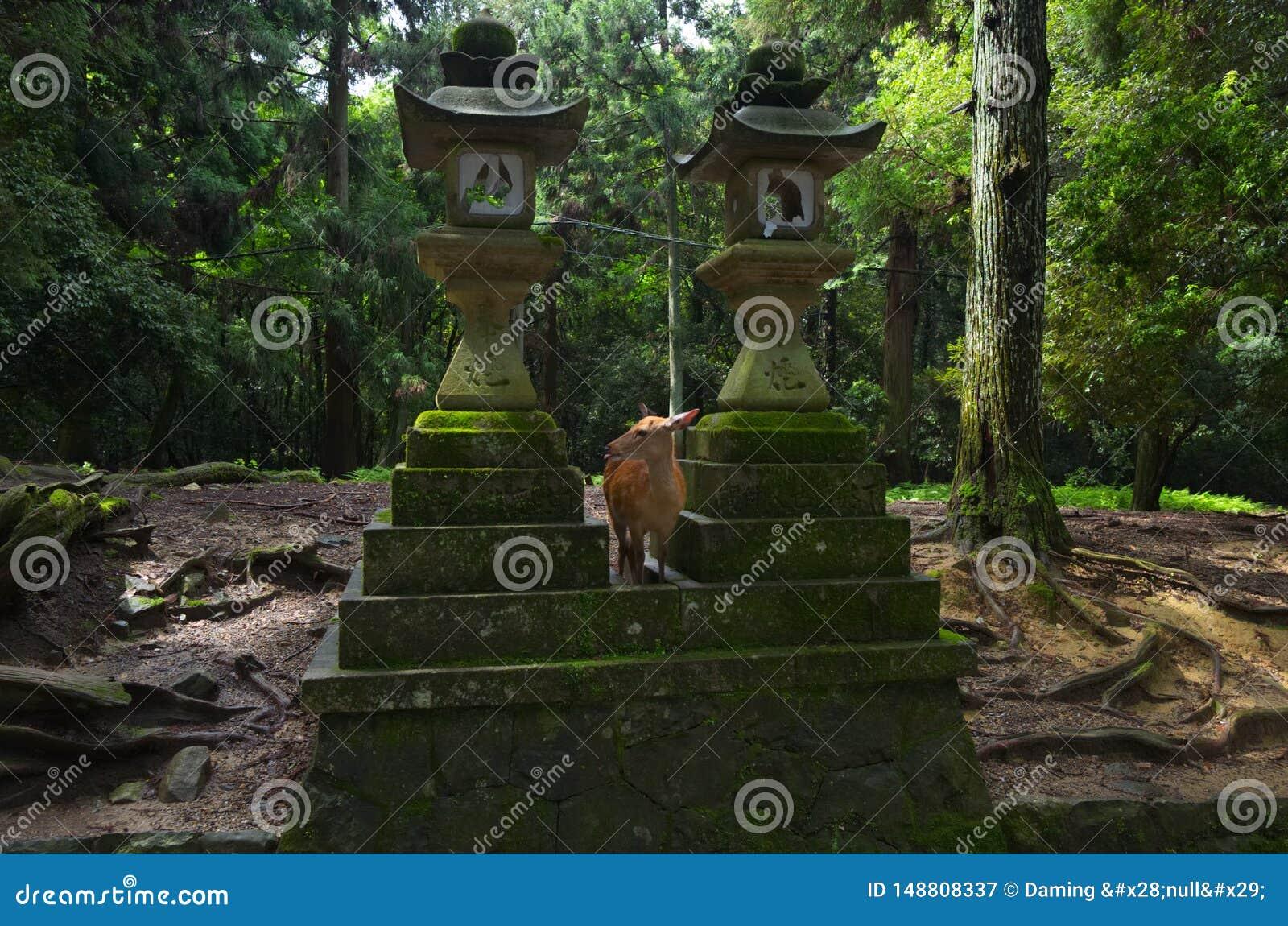 Nara Deer Sagrado, pessoa