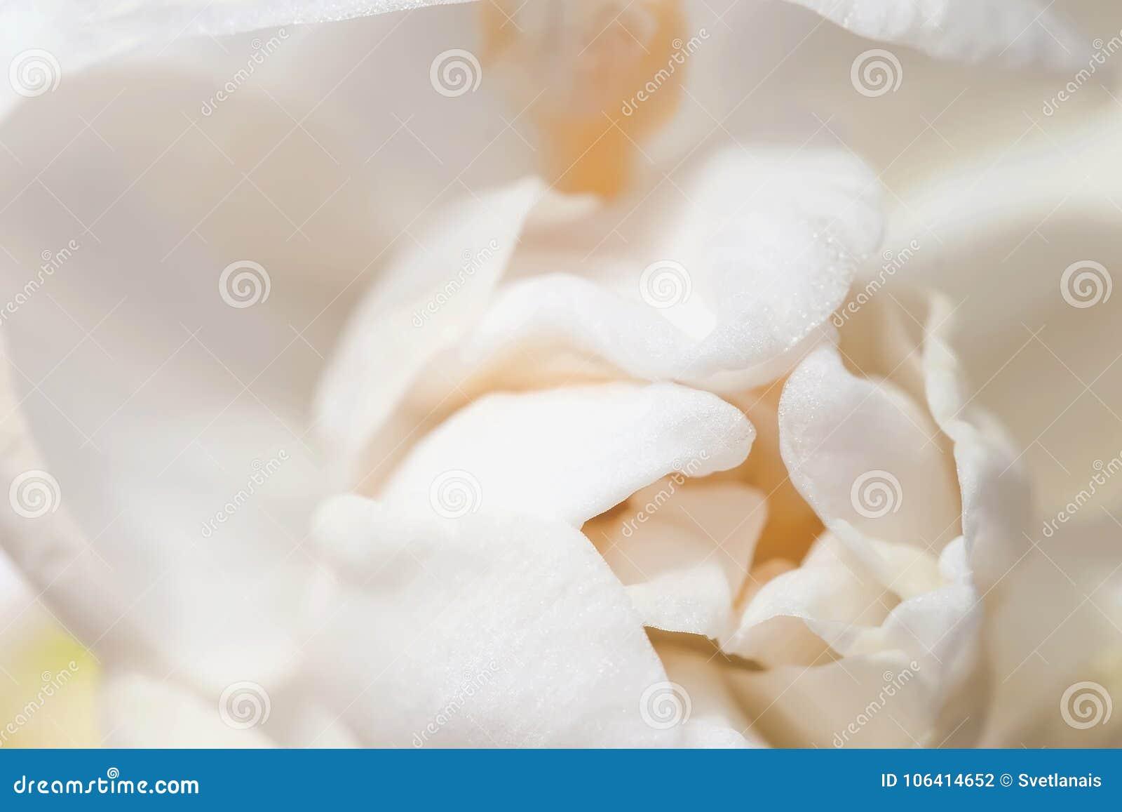 Narciso delicado floreciente de la primavera en colores pastel dulce, primer del narciso, textura, foco selectivo, flor suave fes