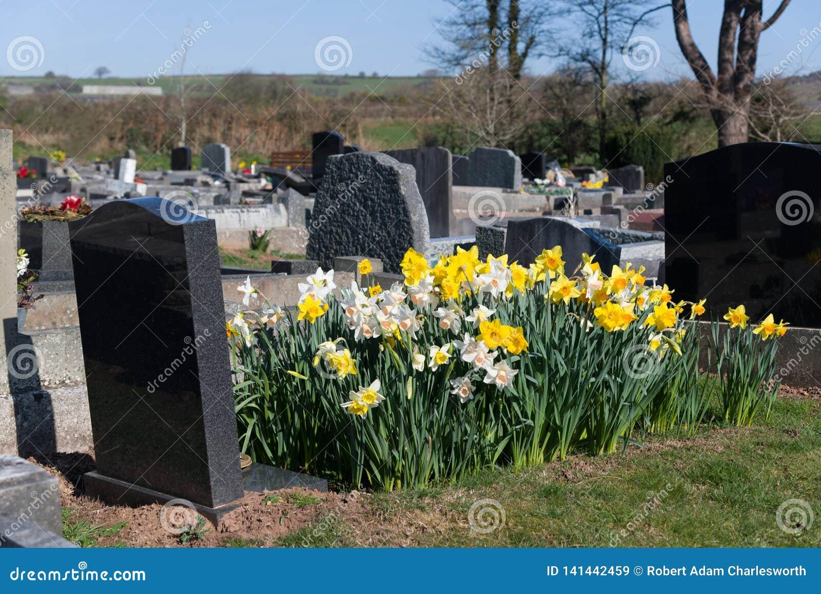 Narcisos con el sepulcro y la lápida mortuoria