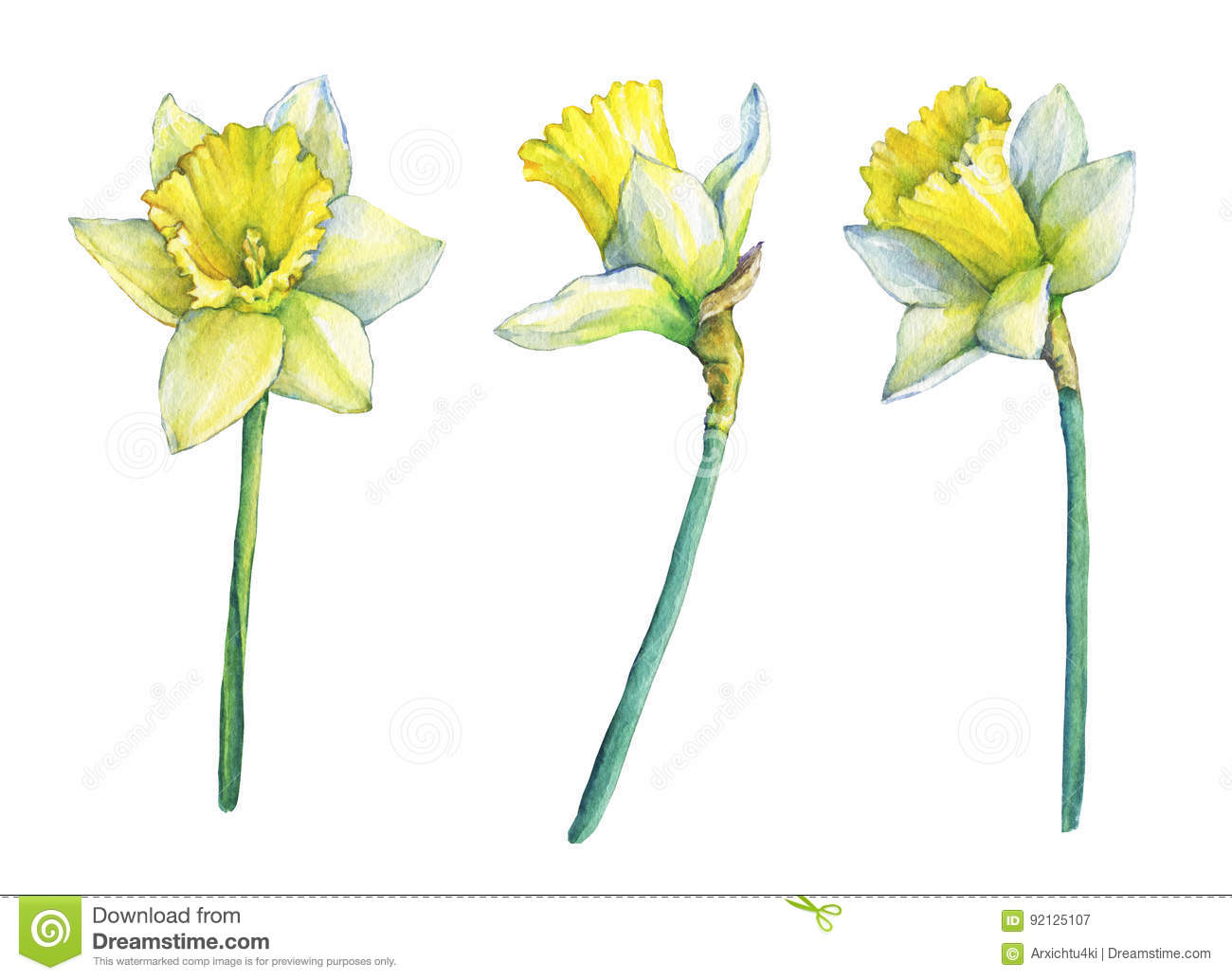 Narcissus common names daffodil flowering plant with yellow flowers narcissus common names daffodil flowering plant with yellow flowers mightylinksfo