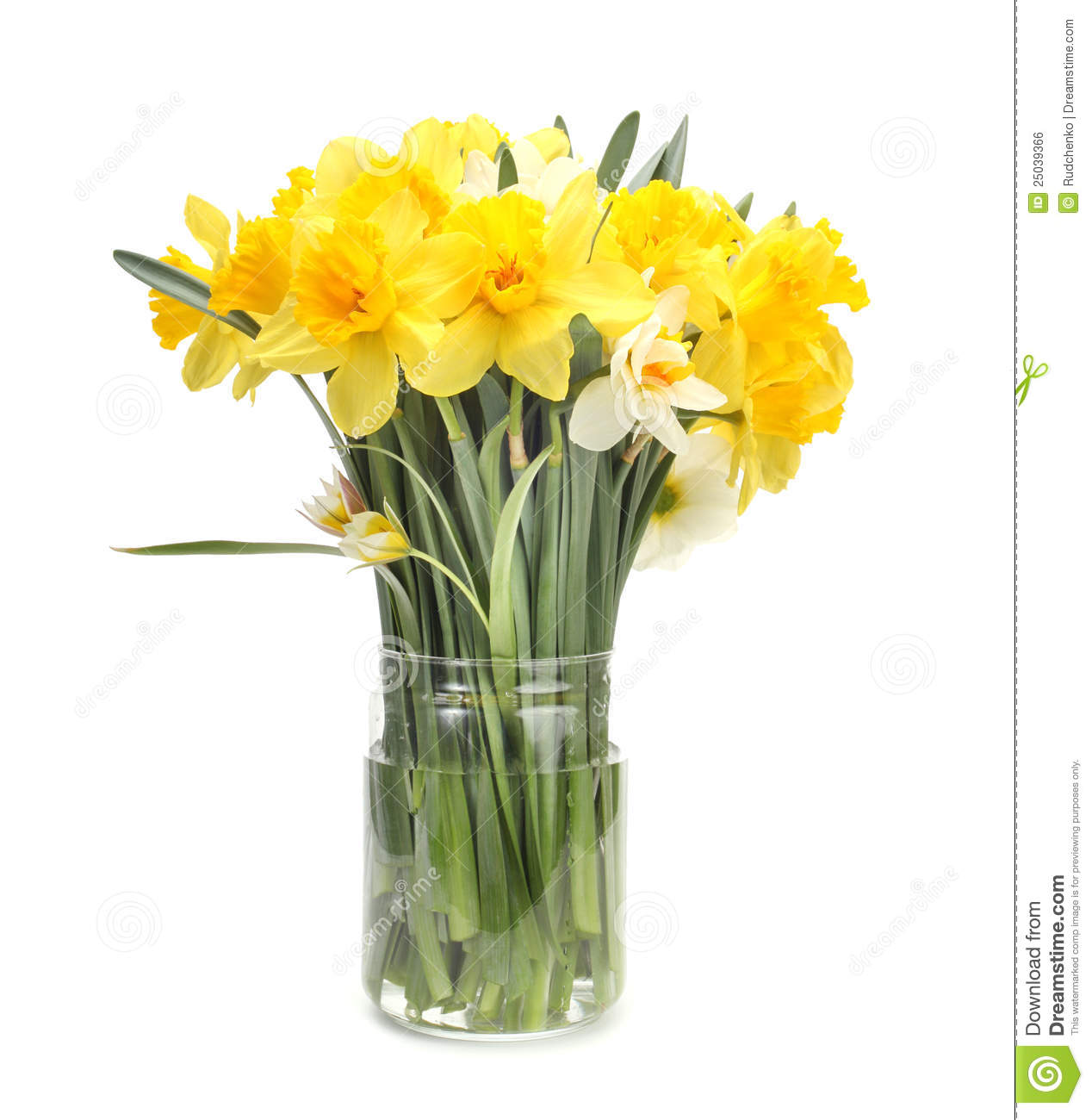 Narcissus Flower Bouquet Royalty Free Stock Image Image