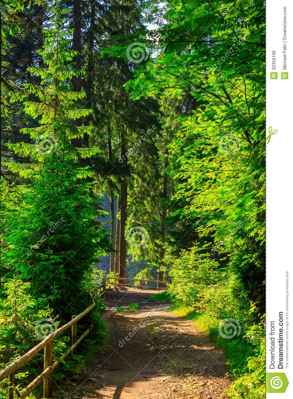 forest corridor with fence - photo #23