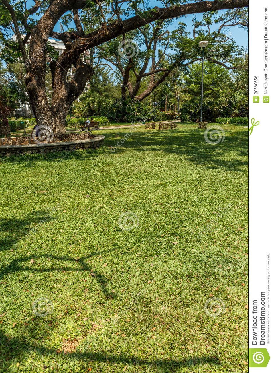 Narrow view of green garden with grass trees plants for Green plants for landscaping