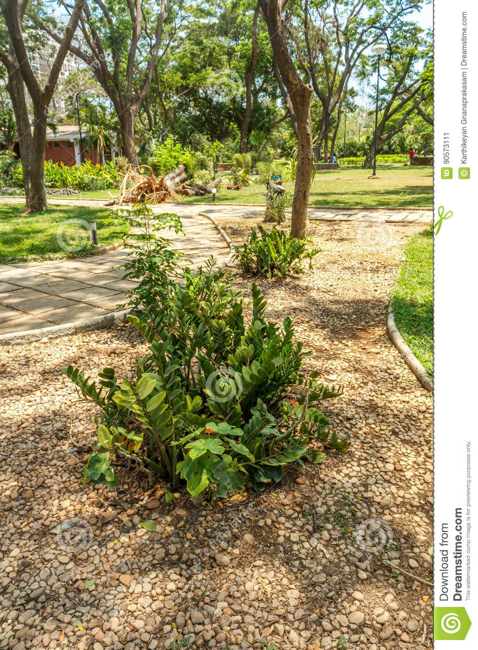 Narrow View Of Green Garden With Grass Trees Plants Shadows And