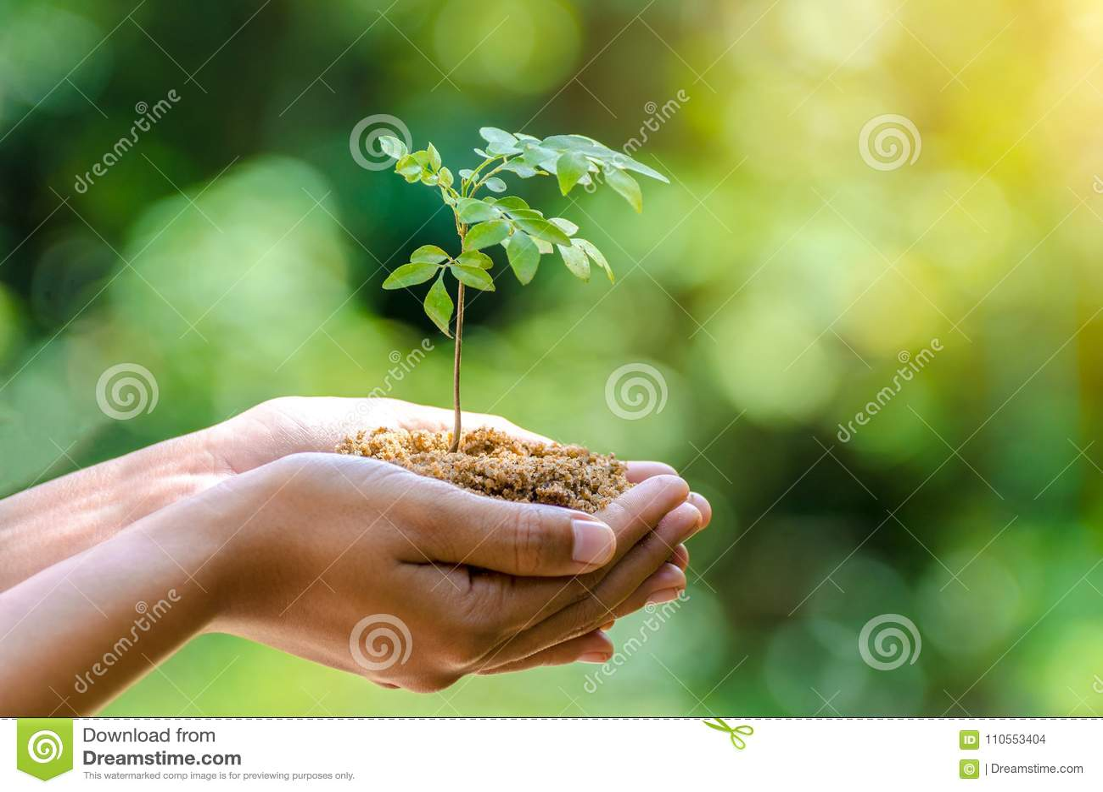 Nas mãos das árvores que crescem a mão fêmea do fundo do verde de Bokeh das plântulas que guarda a conservação da floresta da gra