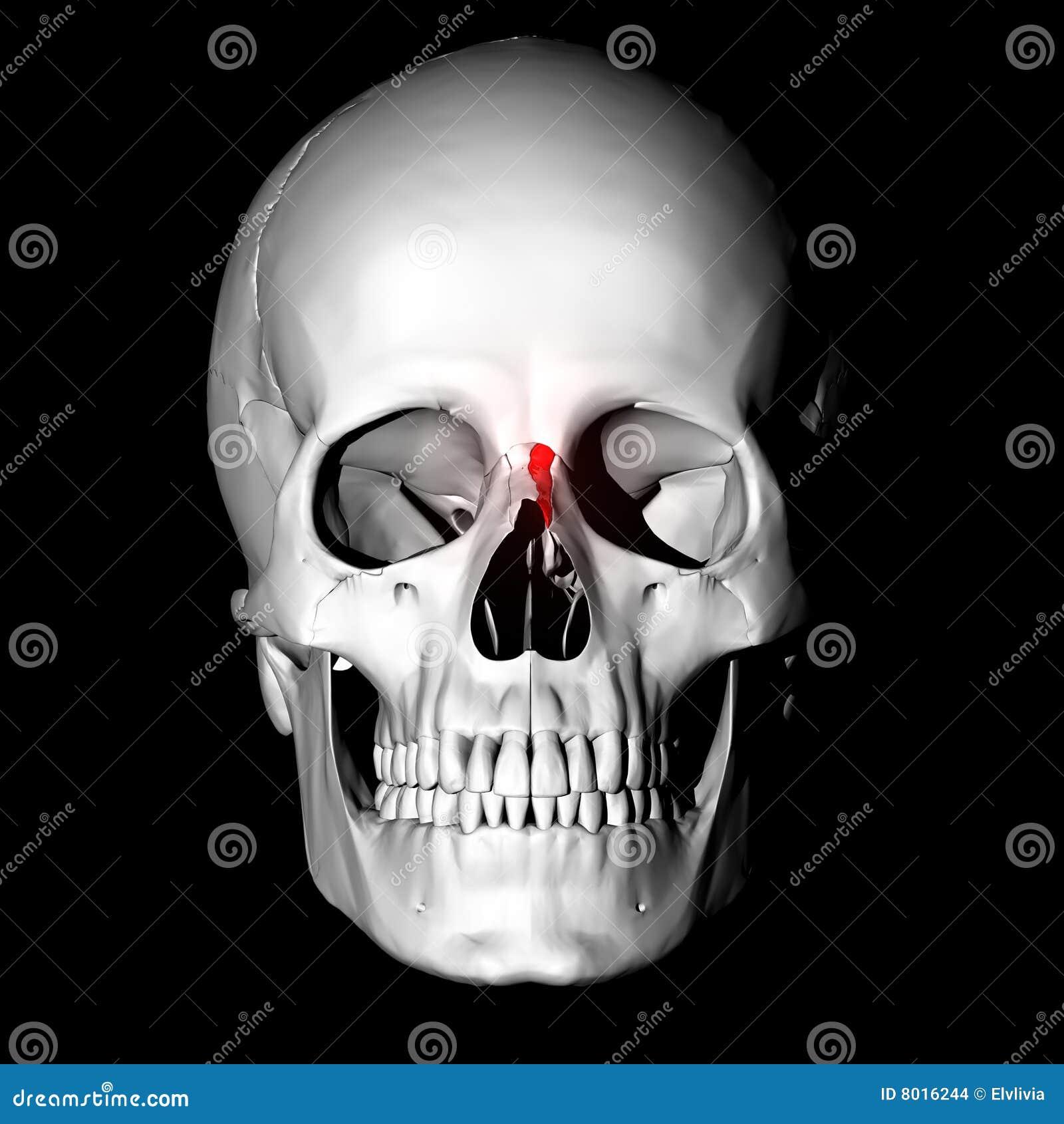 Nasal bone stock illustration. Illustration of bones, skulls - 8016244