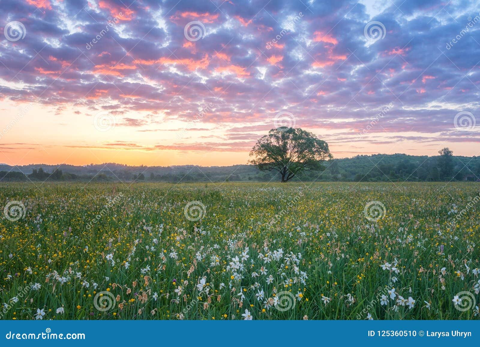 Nascer do sol bonito no vale de florescência, na paisagem cênico com as flores crescentes selvagens e no céu nebuloso da cor