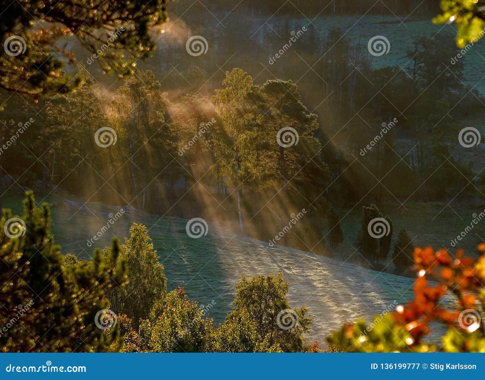 Nascer do sol com raios da névoa e do sol através da floresta da montanha