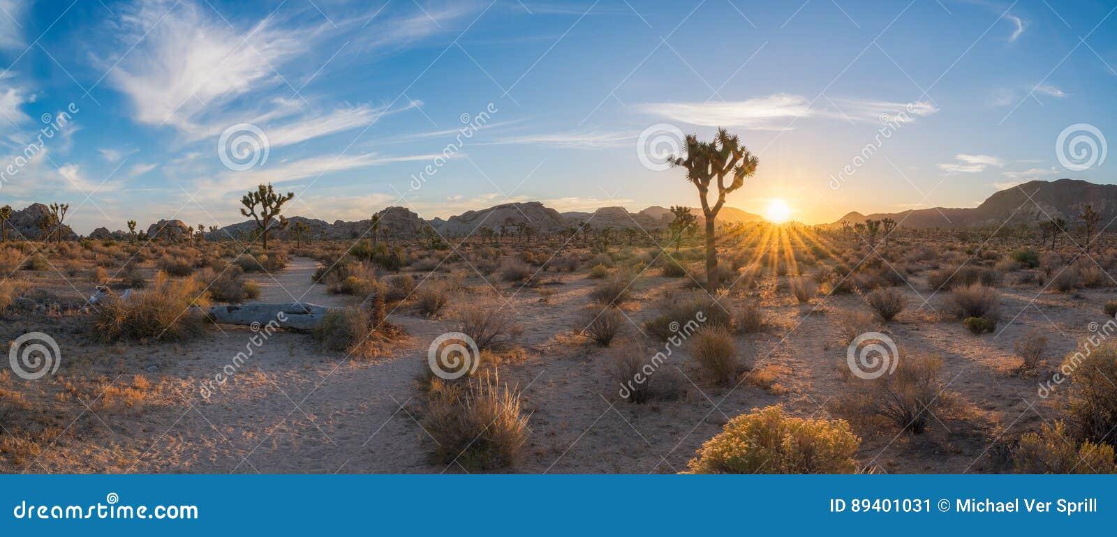 Nascer do sol da fuga de caminhada de Joshua Tree