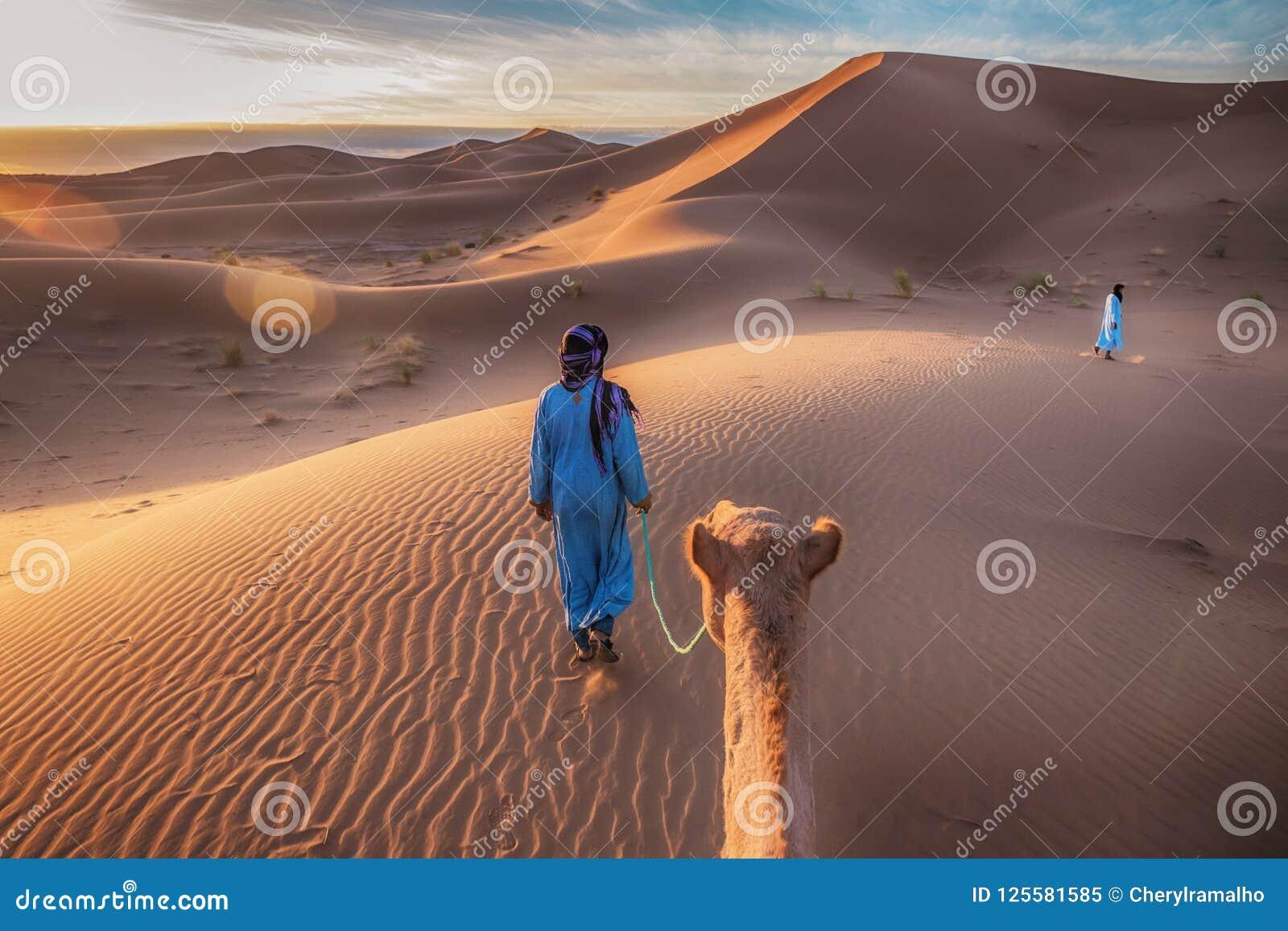 Nascer do sol em Sahara Desert, como um camelo é conduzido através das dunas de areia douradas por dois membros duma tribo nómada