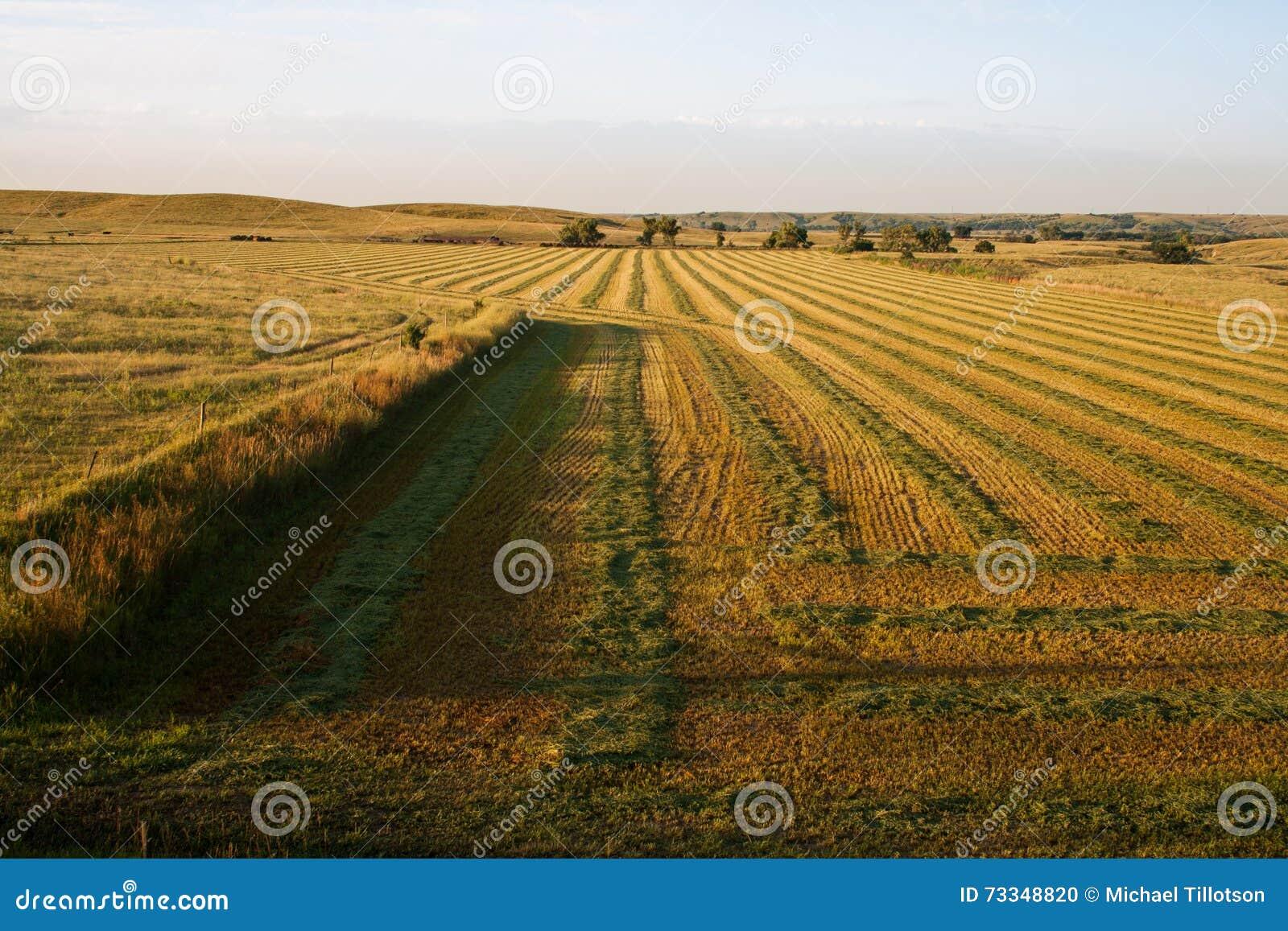Nascer do sol sobre Hay Field