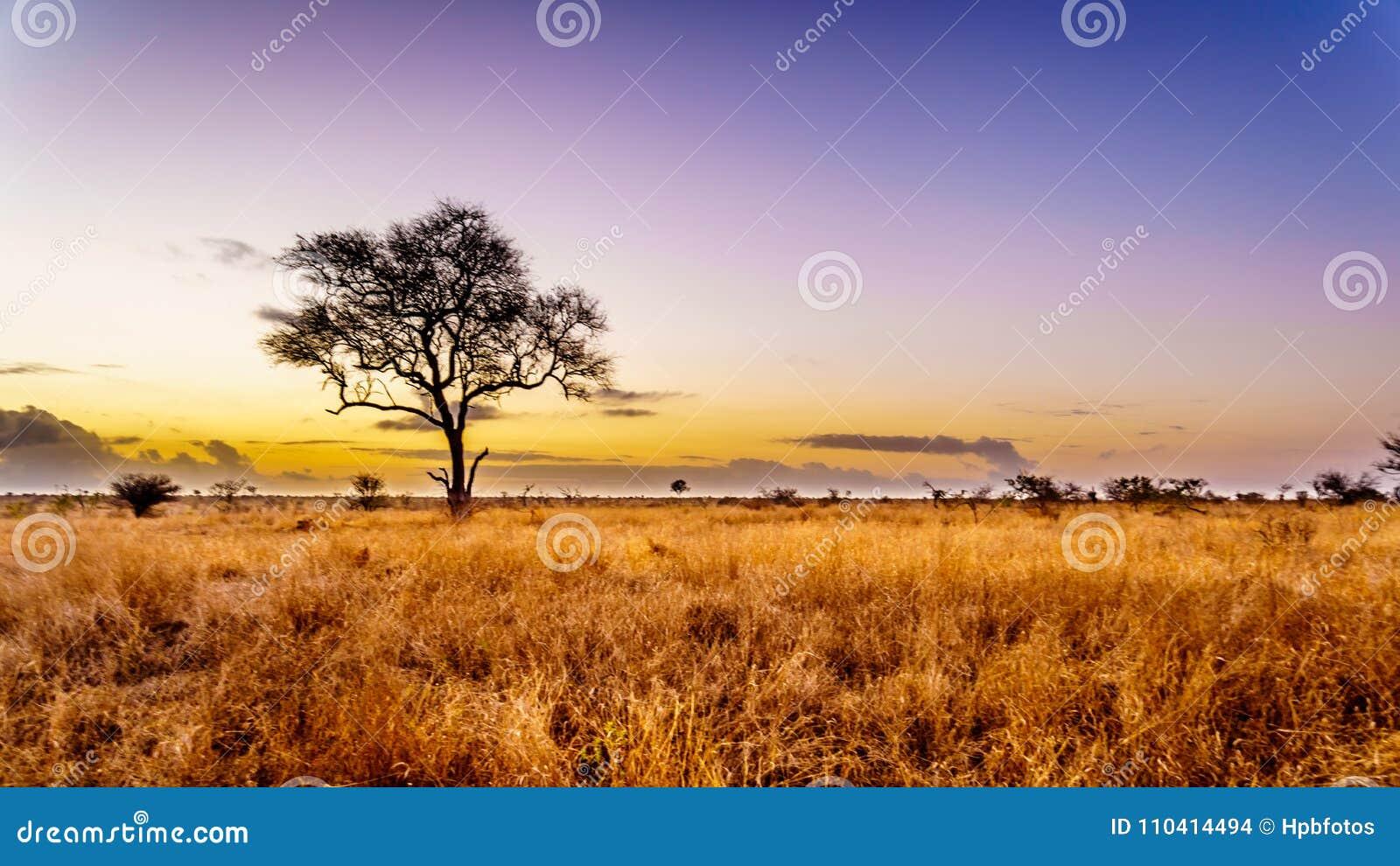 Nascer do sol sobre os campos do savana e de grama no parque nacional central de Kruger