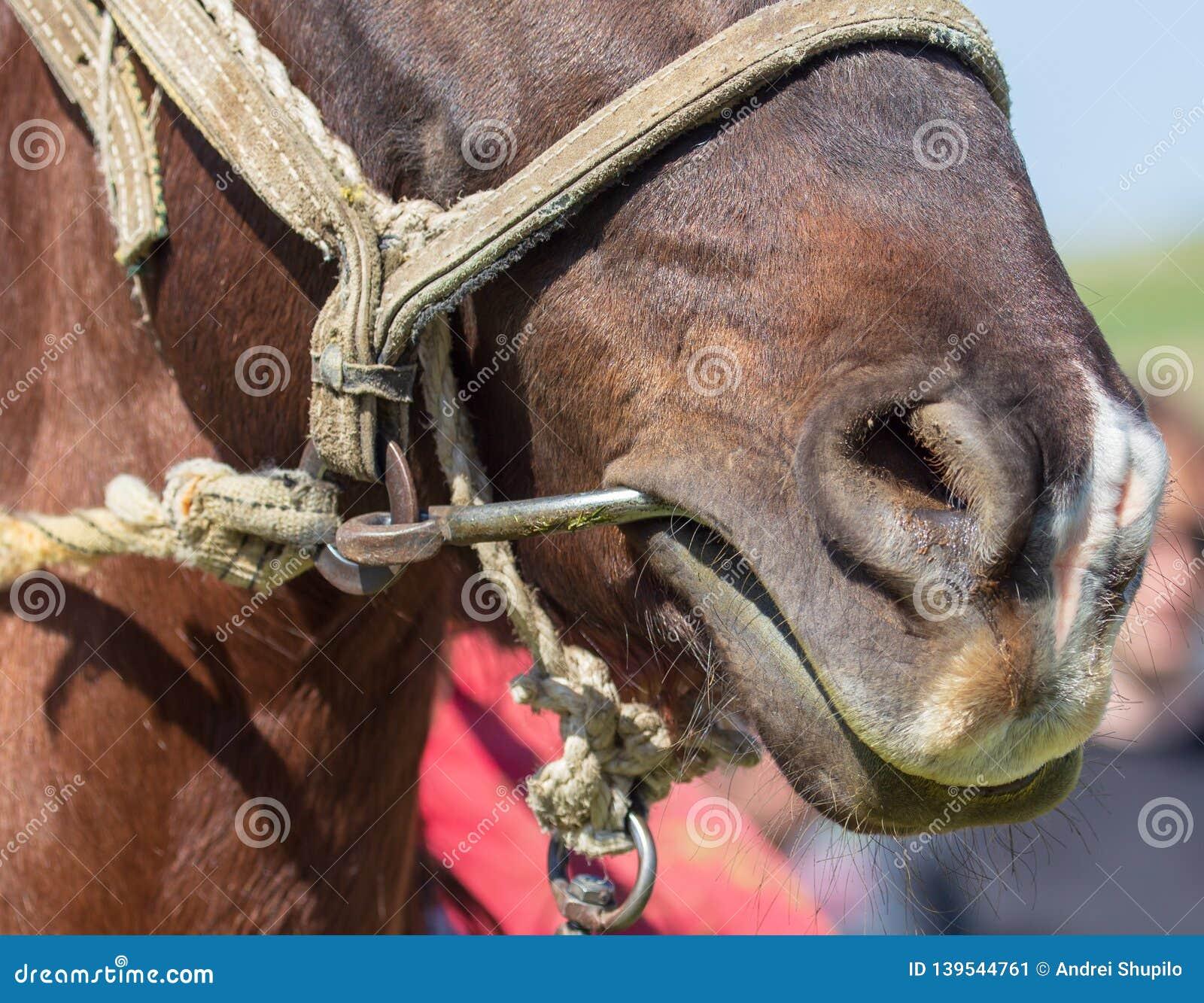 Nase auf Pferdekopf in der Natur