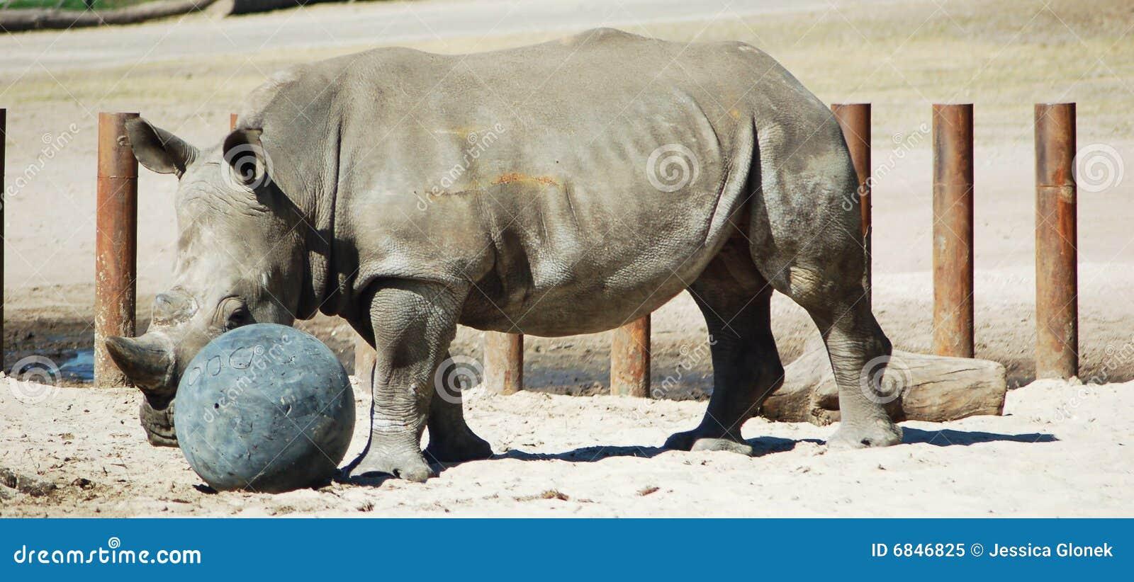Nashorn, das mit Kugel spielt