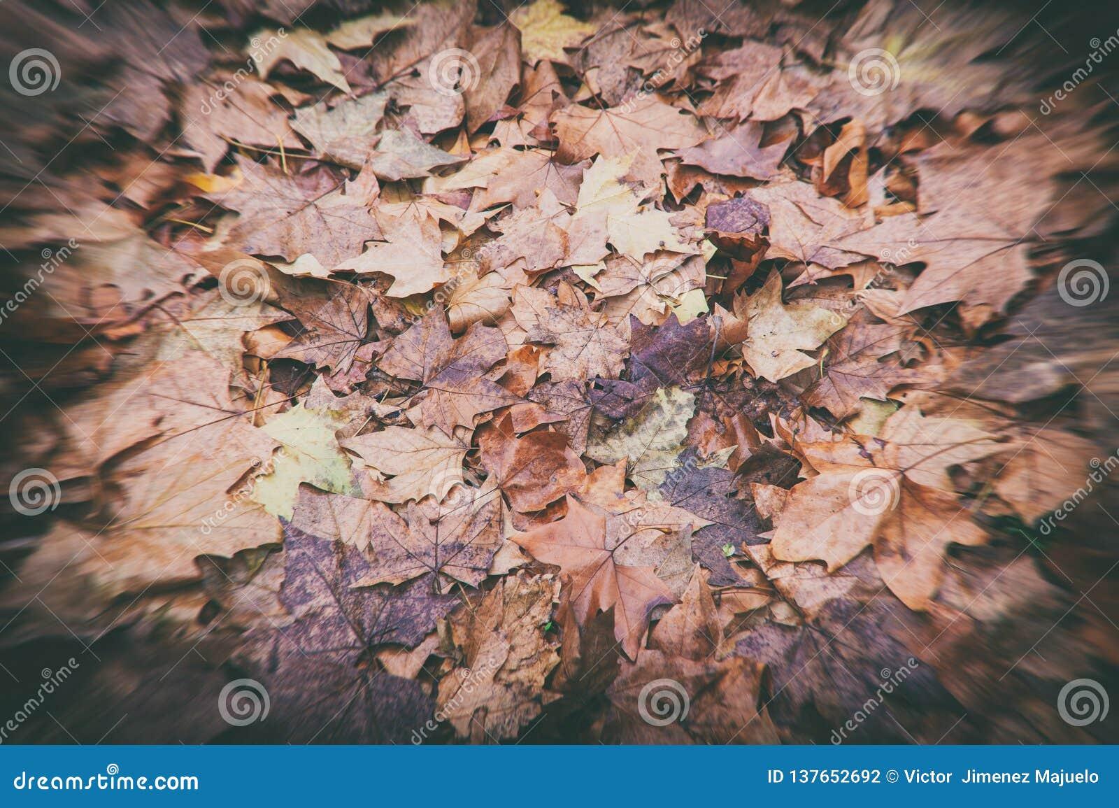 Nass desaturated gefallene Blätter Browns