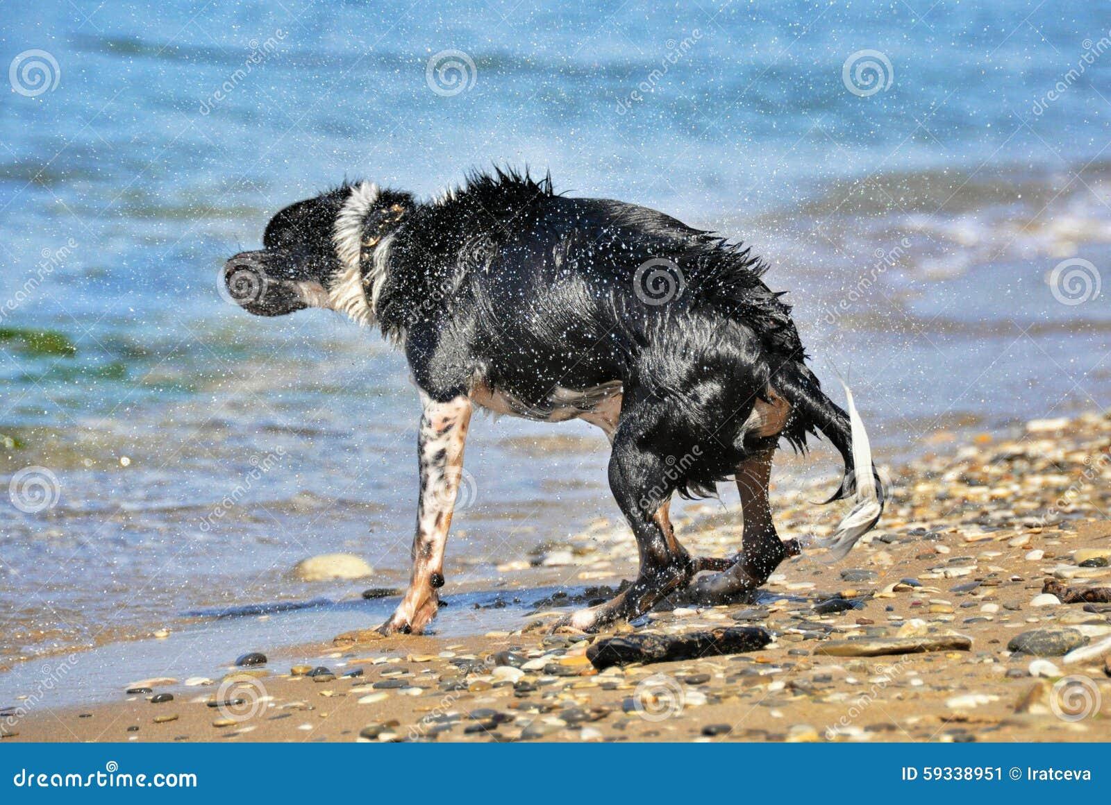 Nasser Hund auf dem Strand