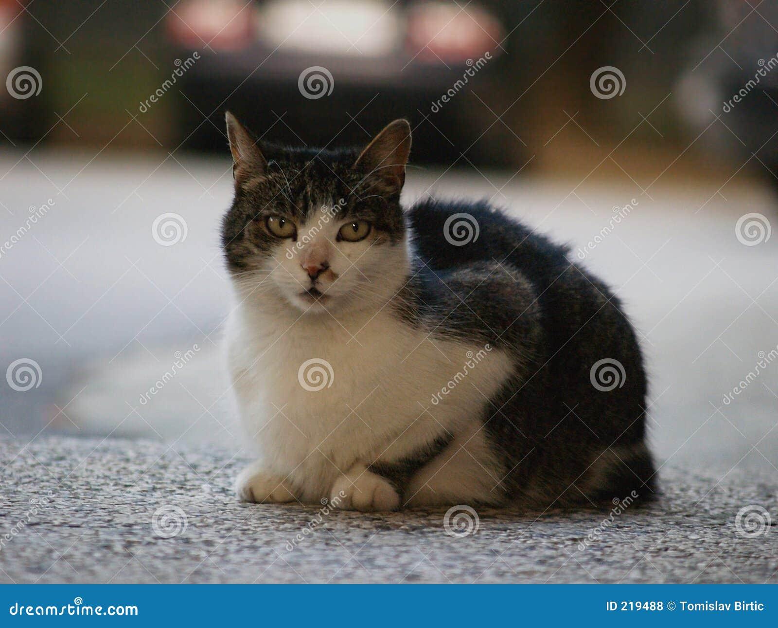 Następne drzwi kota