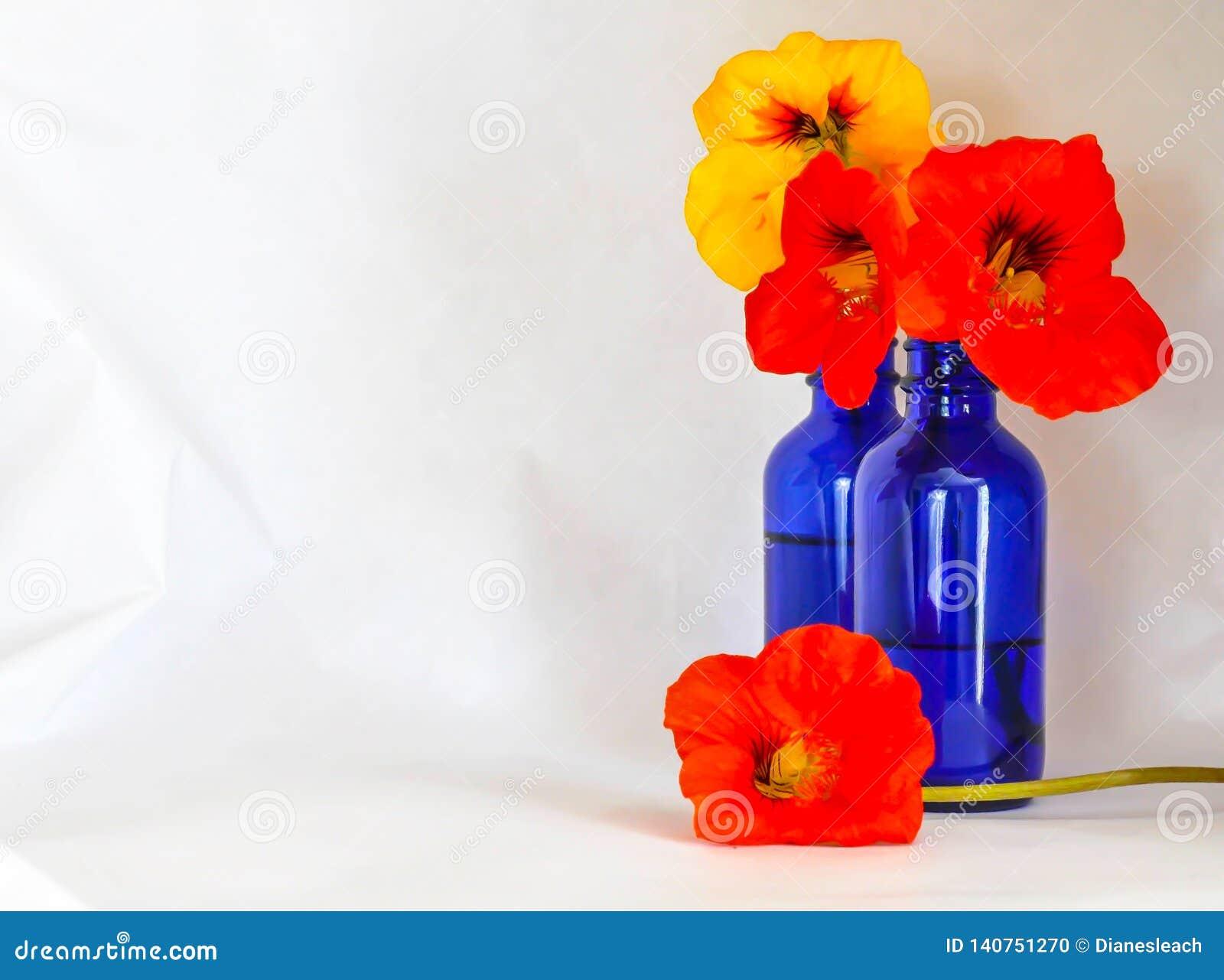 Nasturces dans une bouteille bleue contre un contexte blanc