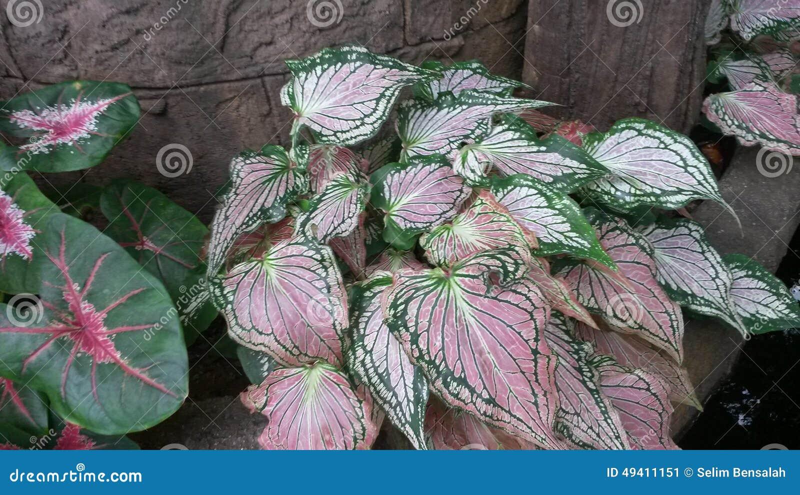 Download Natürliche Beschaffenheit Von Mehrfarben Stockbild - Bild von landschaft, mehrfarben: 49411151
