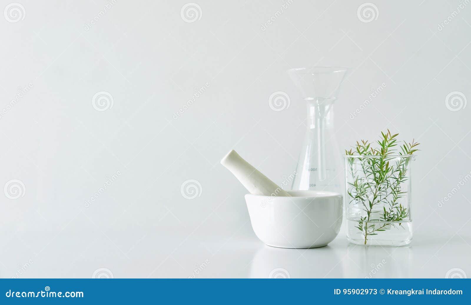 Natürliche organische Botanik und wissenschaftliche Glaswaren, alternative Krautmedizin, natürliche Hautpflegeschönheitsprodukte