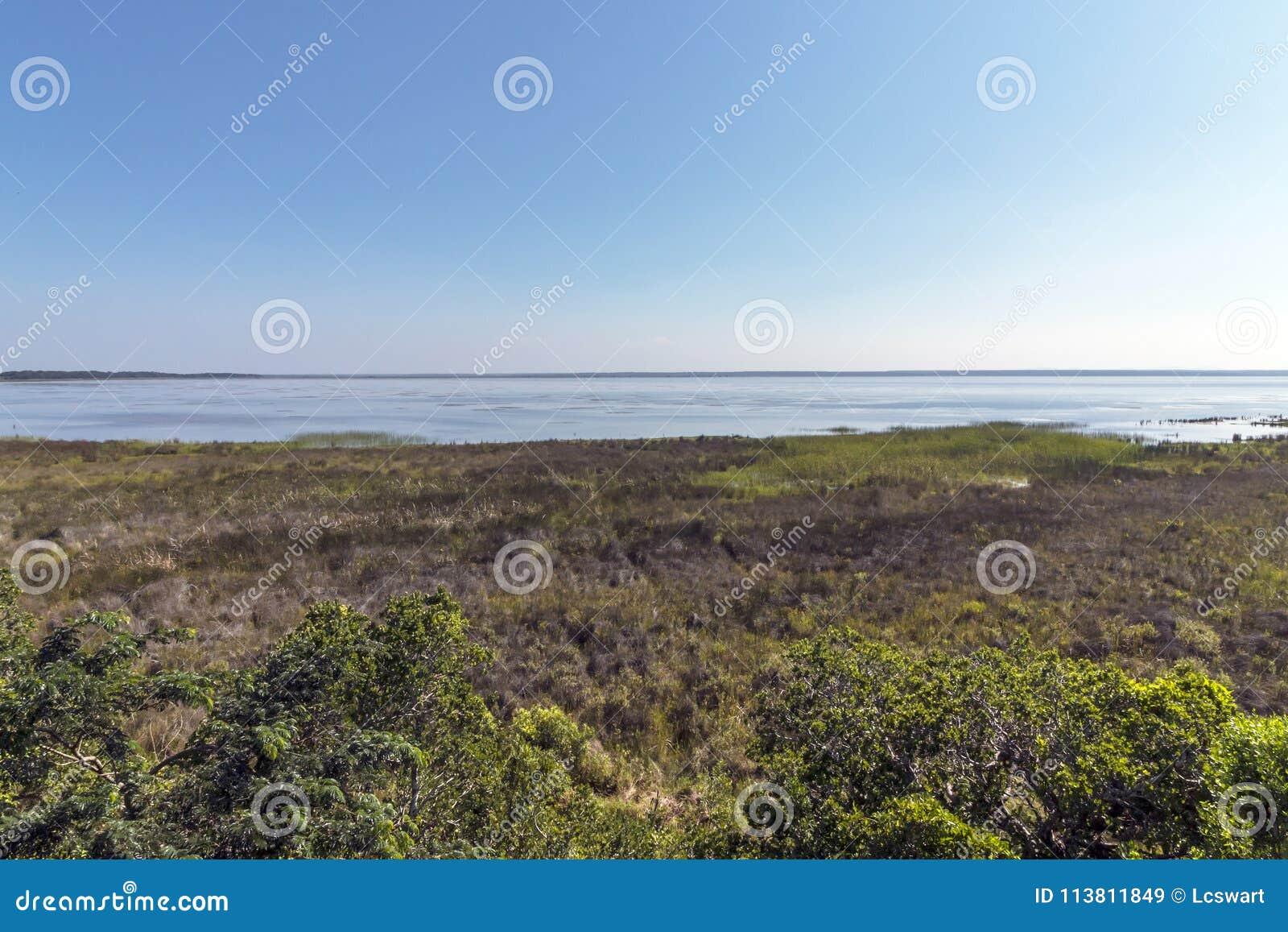 Natürliche Sumpfgebiet-Vegetation an See-St. Lucia South Africa