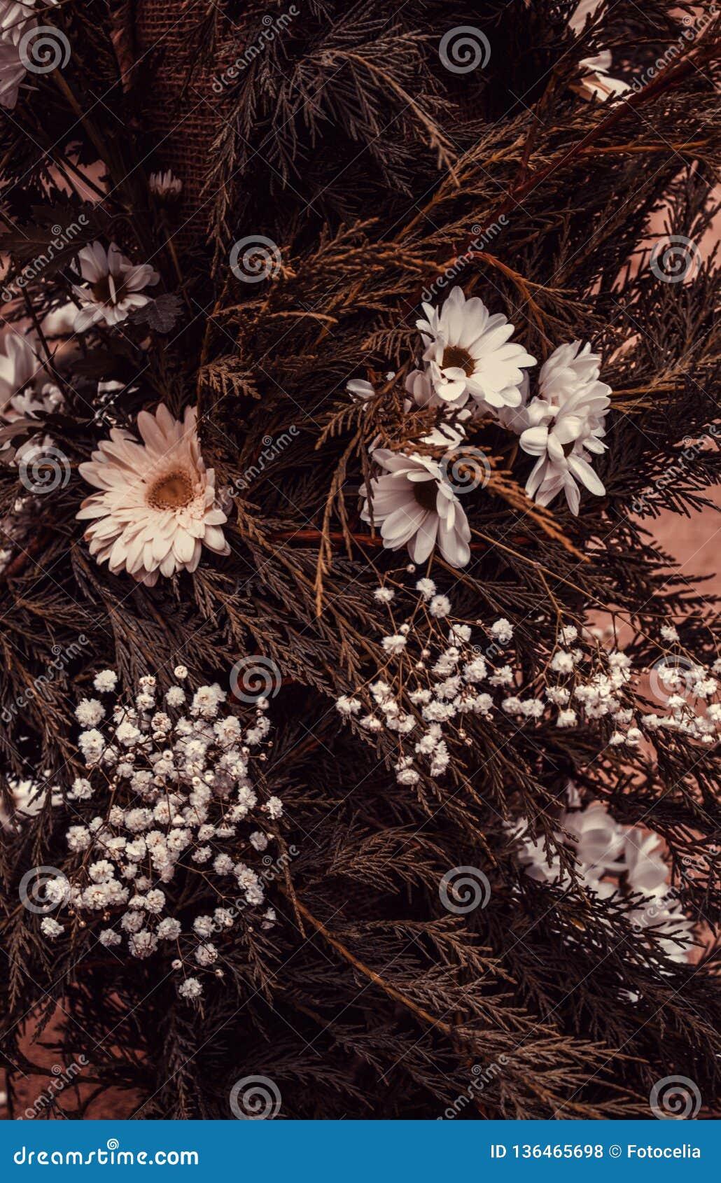 Natürliches weißes Gänseblümchen