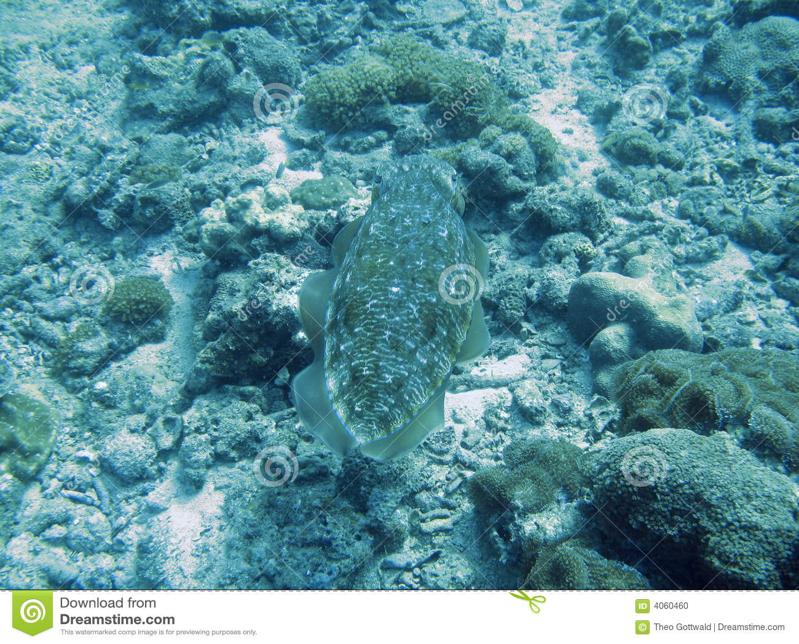 Natação dos peixes no recife tropical