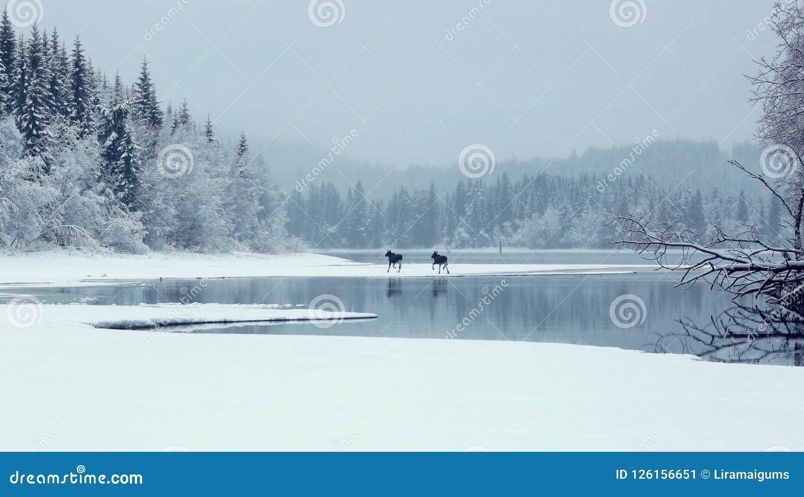 Natal nevoento chuvoso no lago Selbu, Noruega