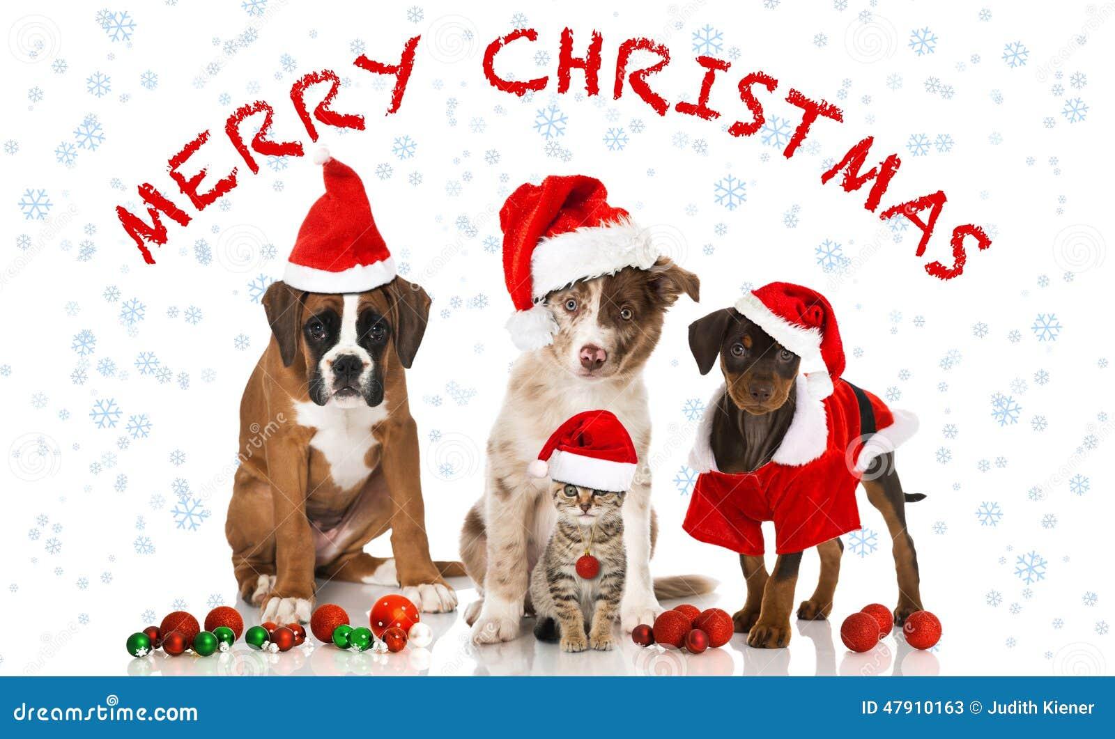 Immagini Cani Natale.Natale Gatto E Cani Immagine Stock Immagine Di Isolato