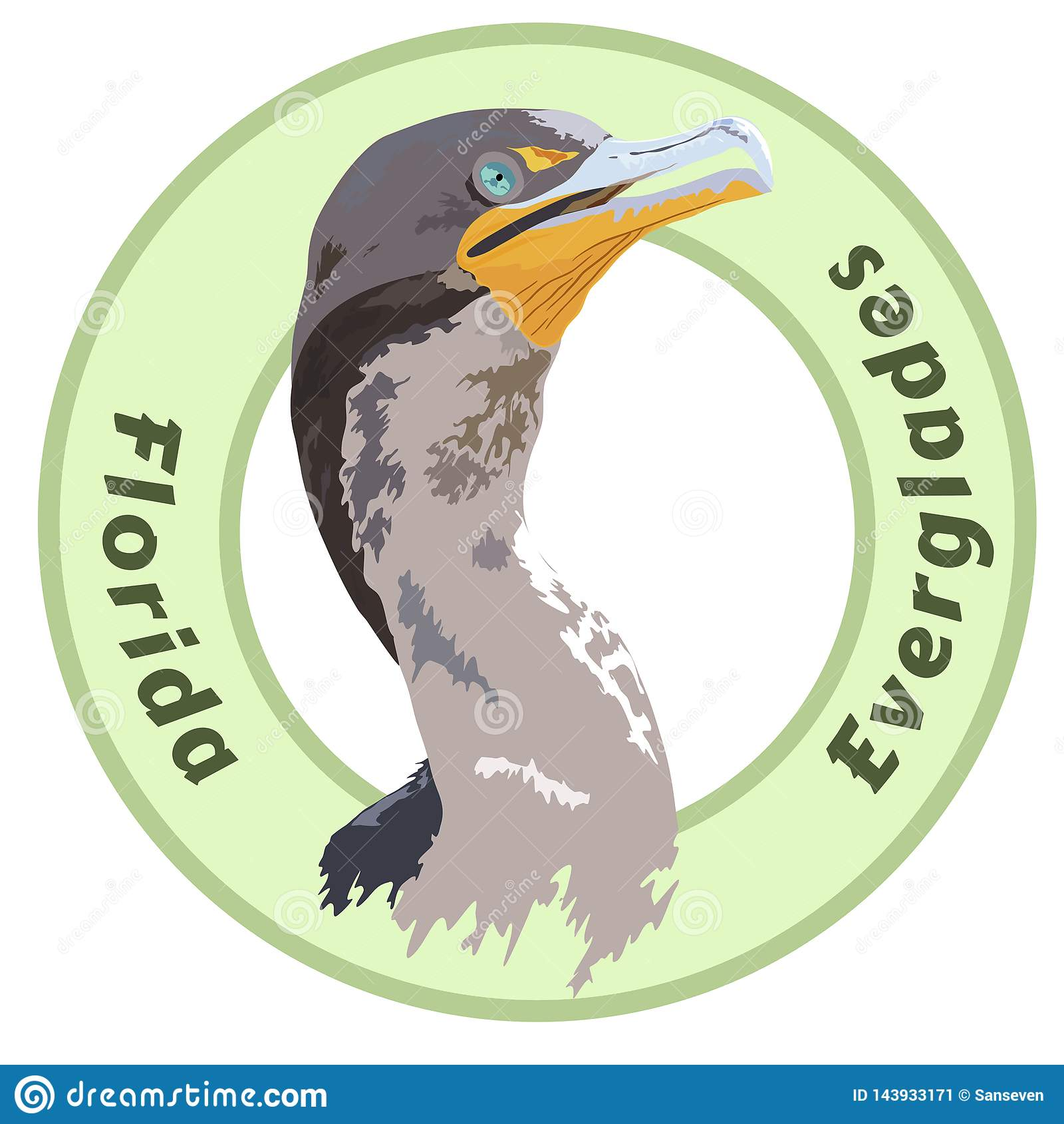 Nationaal het Parkaalscholver Gedetailleerd Vectorontwerp van Florida Everglades