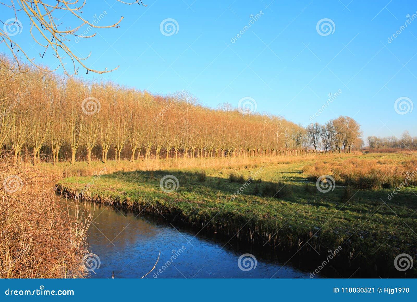 National Park DE Biesbosch in Provincie Zuid-Holland, Nederland, een panorama