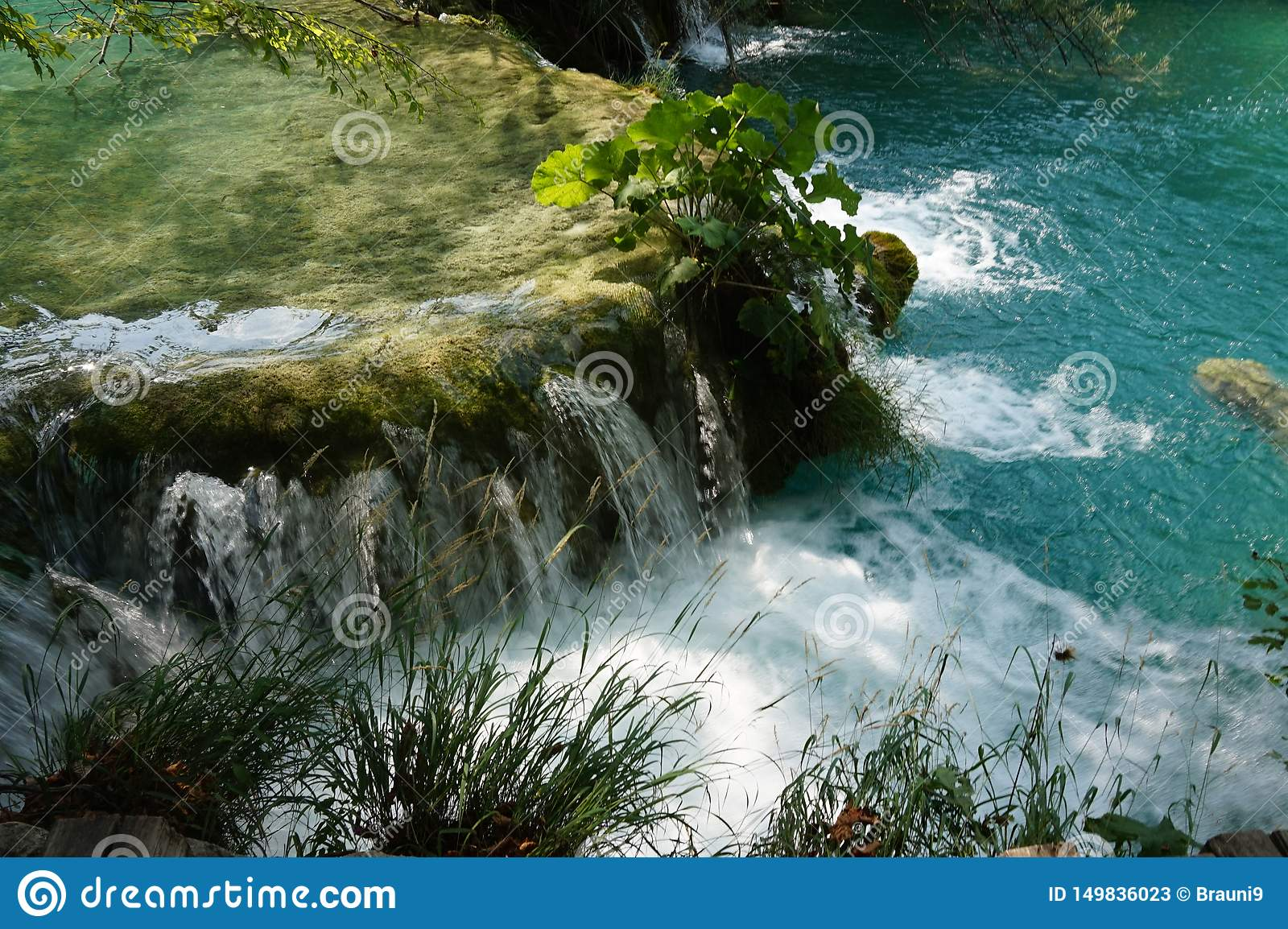 National Park Plitvice Lakes Croatia - A little Waterfall and a plant in it