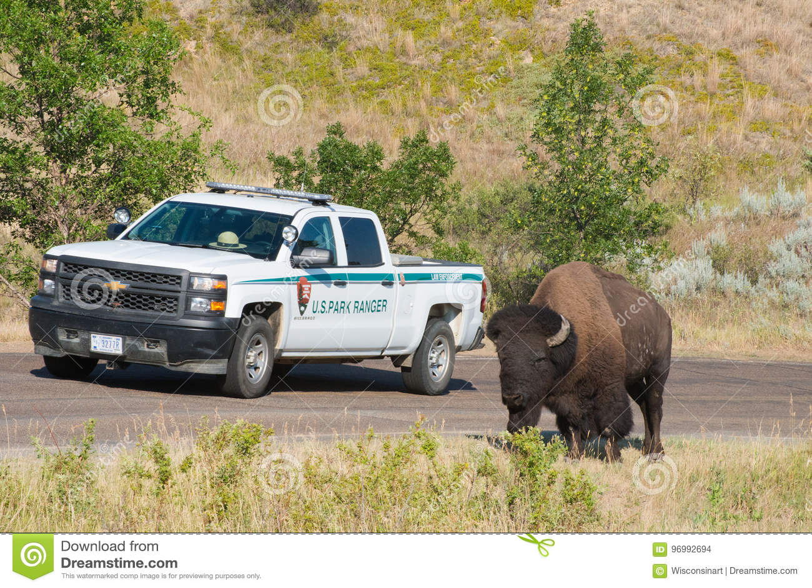 National Park Service, Amerykański bizon