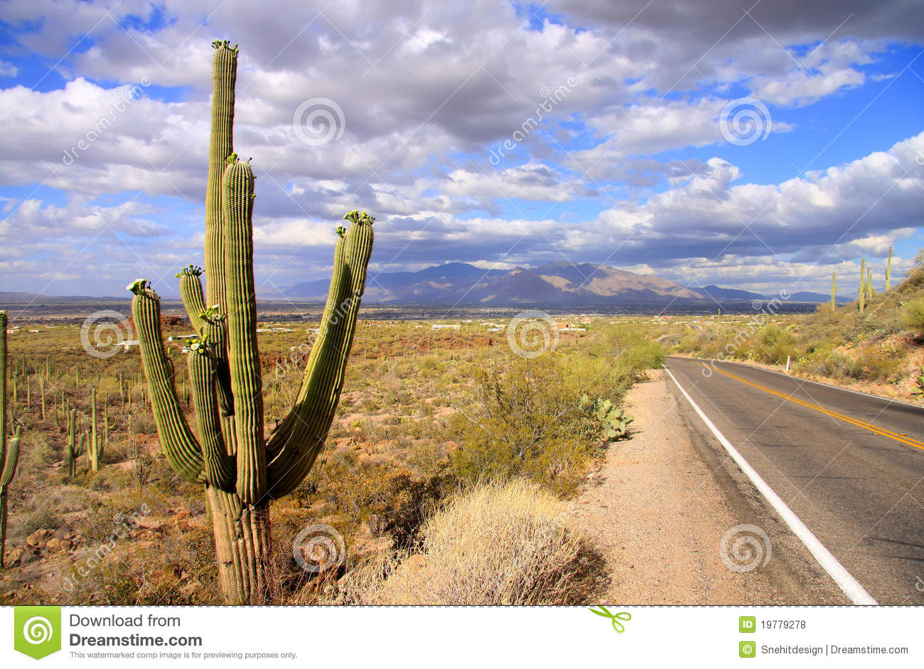 Nationalparksaguaro