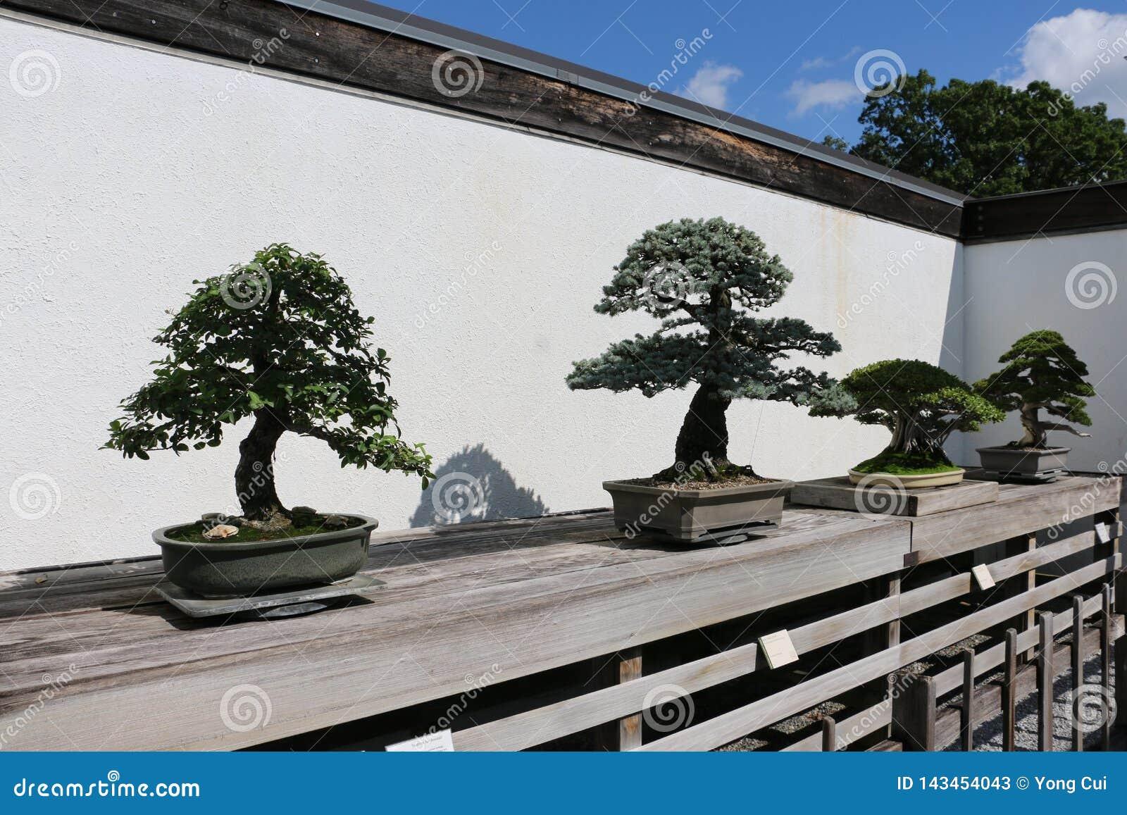 Nationell Arboretum för Förenta staterna