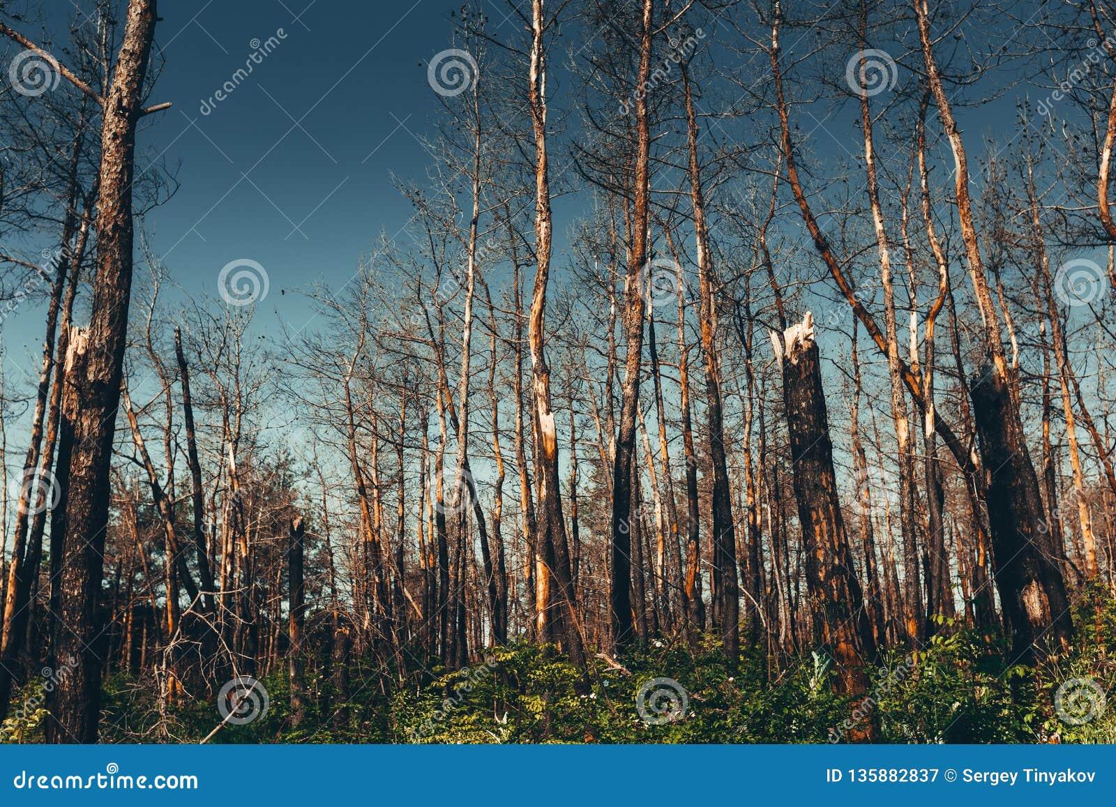 Nationella miljö- problem, miljöbelastning, död skog, skadlig produktion, barbarisk skogsavverkning, hotet till