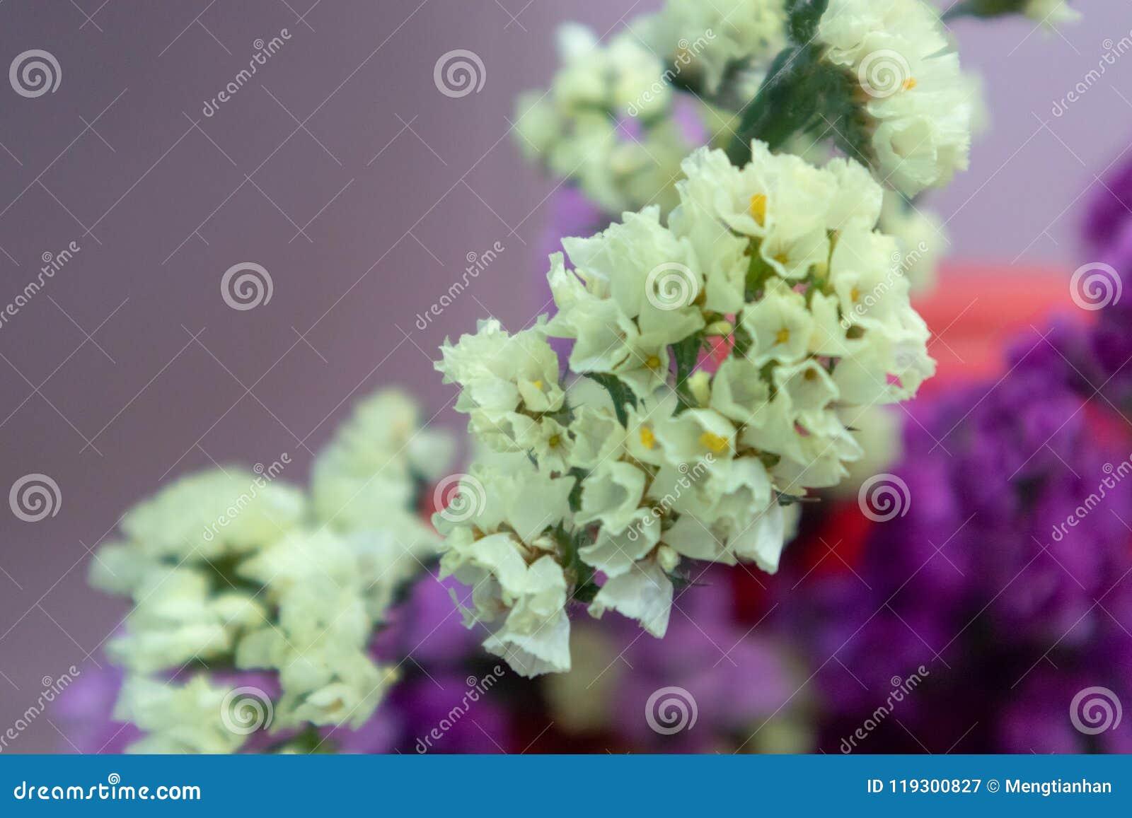 Sea lavender cut flower stock image image of lavender 119300827 download sea lavender cut flower stock image image of lavender 119300827 izmirmasajfo