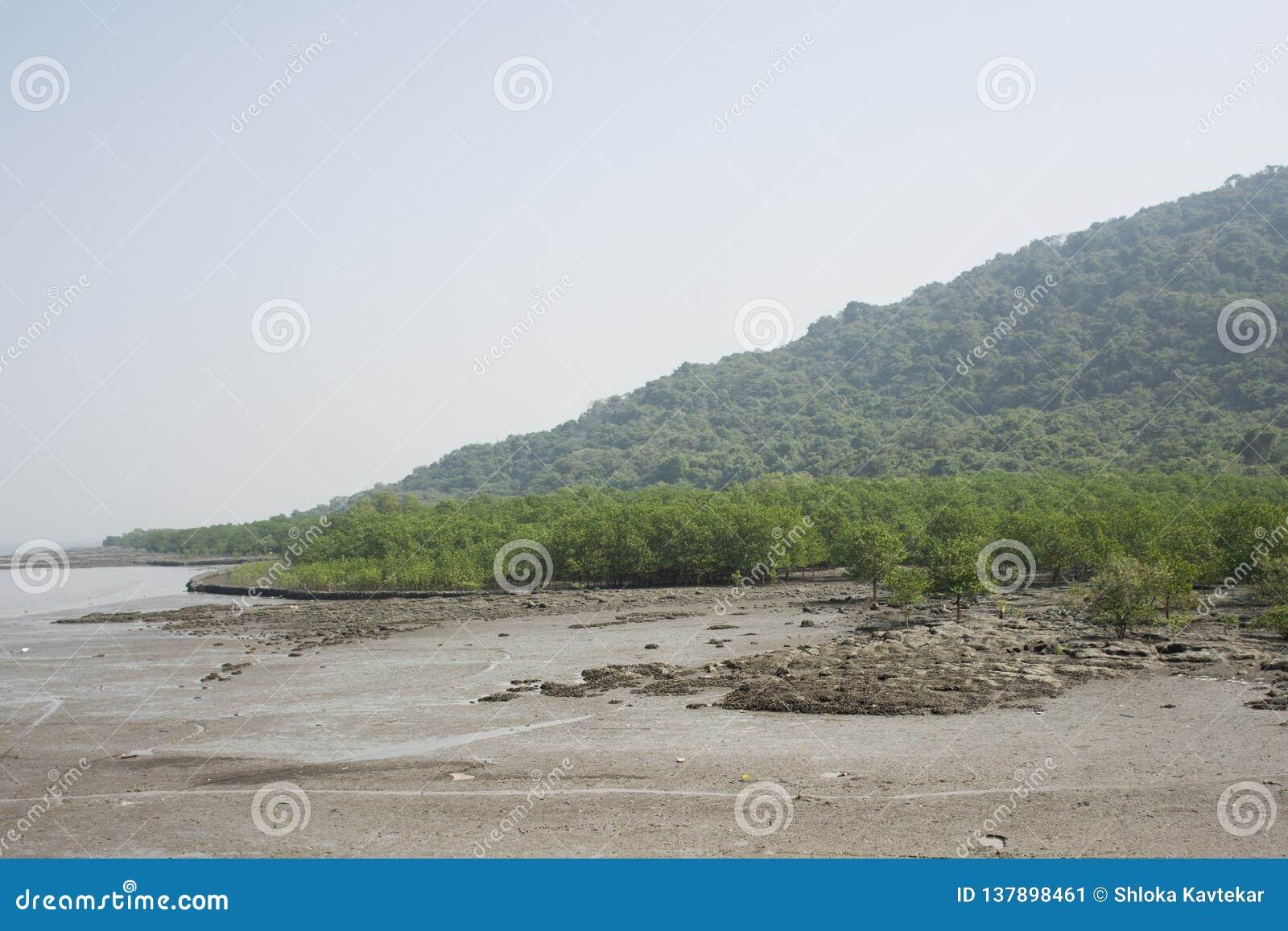 Natte grond bij de kust
