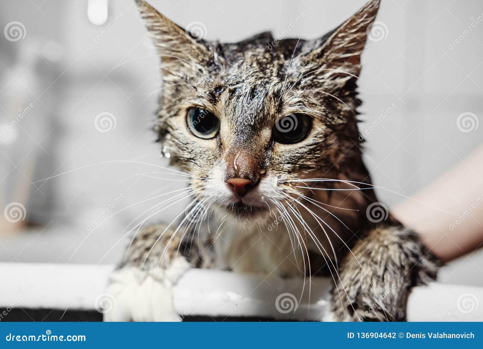 Natte schone kat in badkamers
