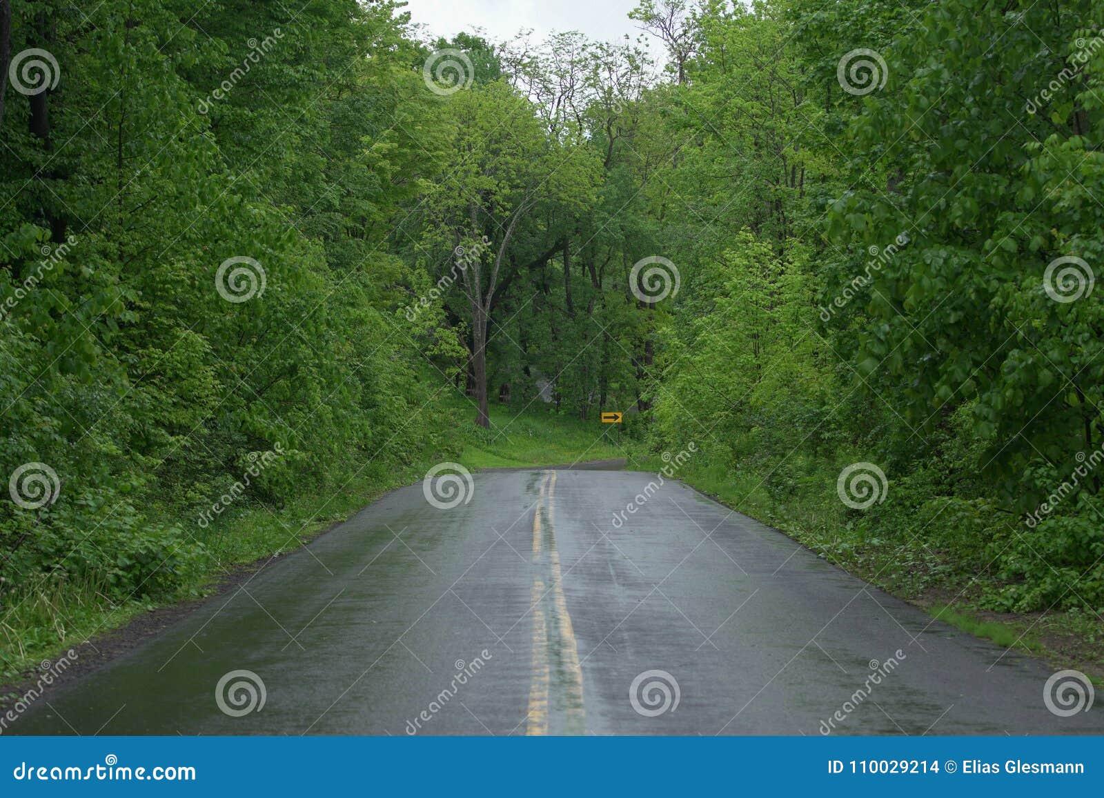 Natte Weg met groene de zomer