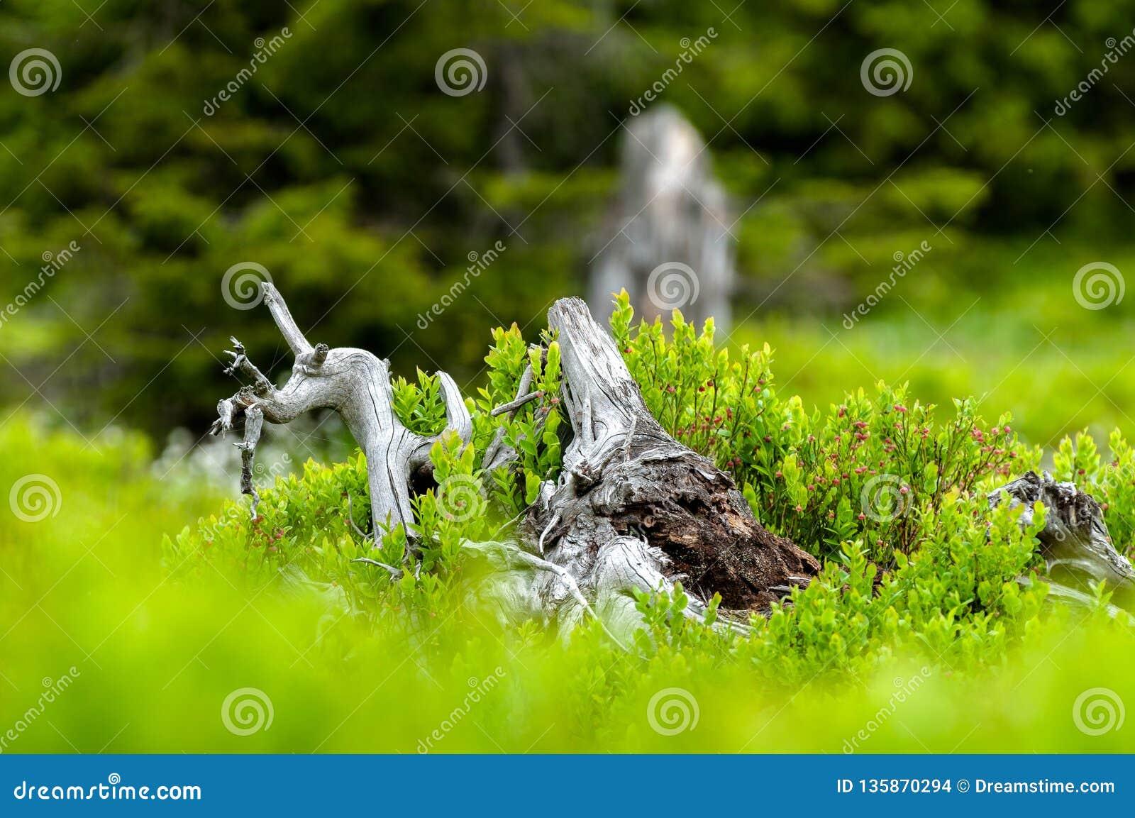 Natur auf die Oberseite von Wysoka Kopa