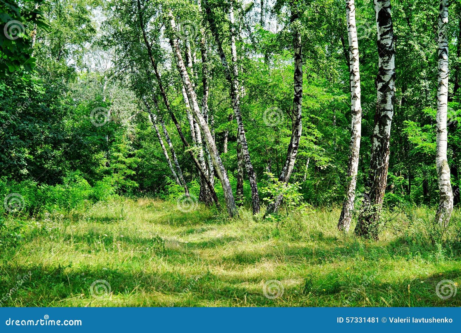 Natur av Ukraina Myrhorod