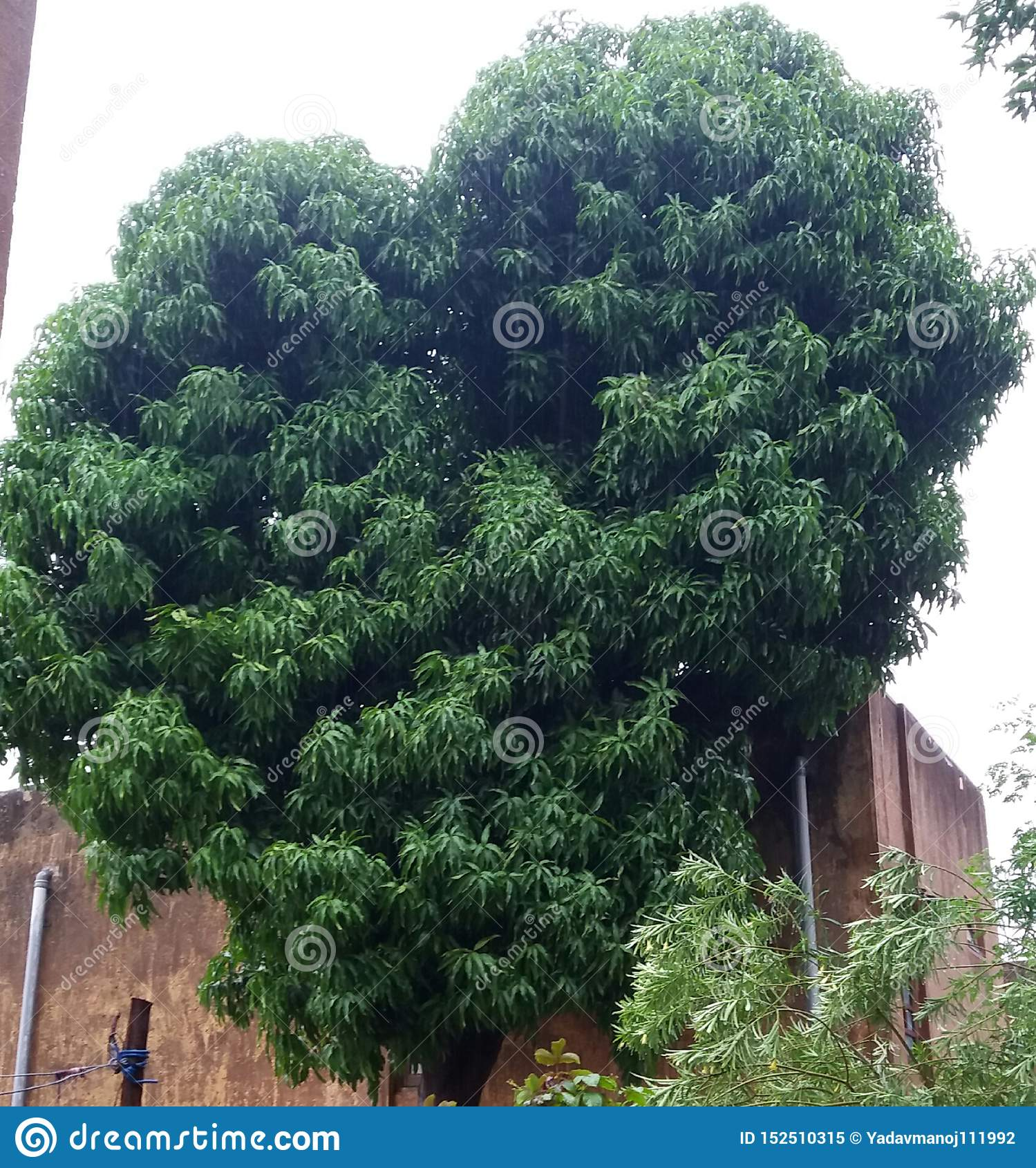 Natur drzewa i ro?liny