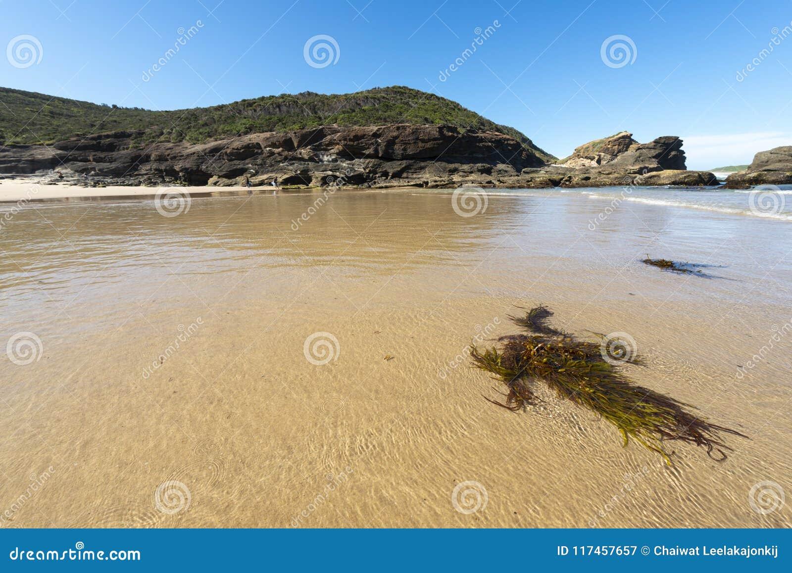 Natur från den härliga stranden i Sydney