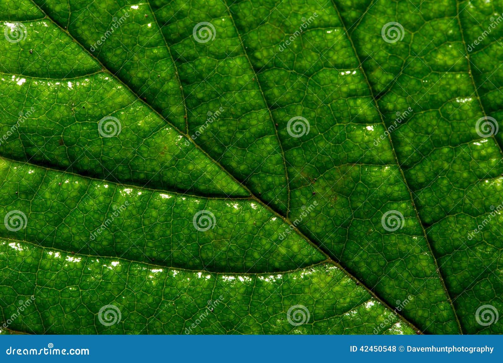 Natur-Hintergrund-Blatt-Abschluss oben