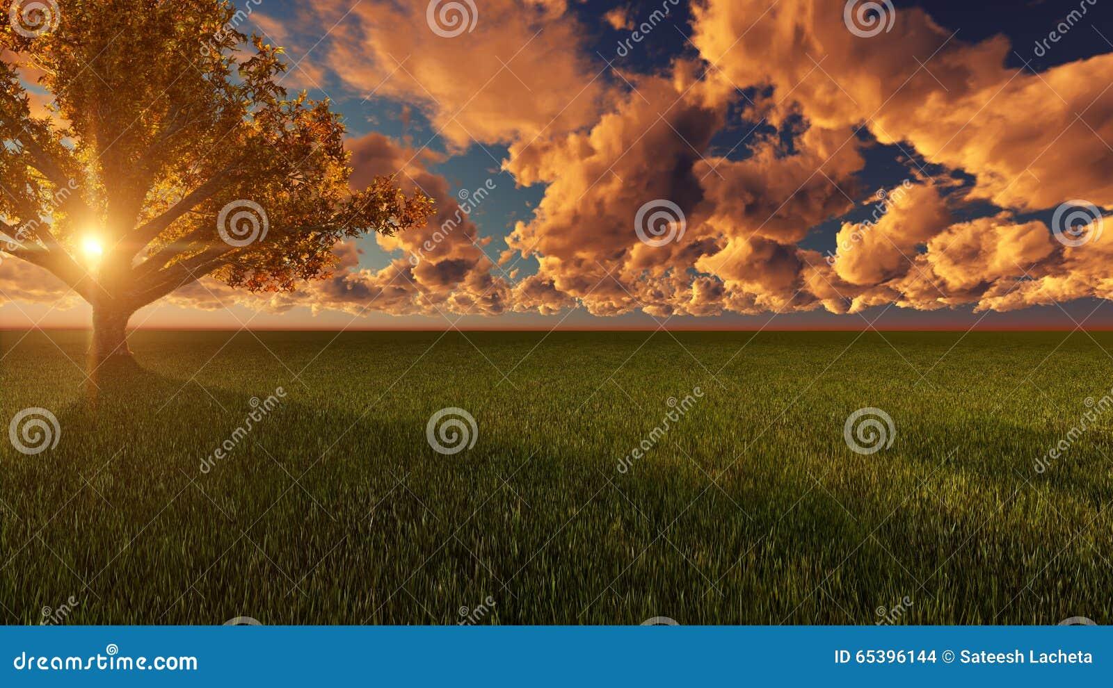 Natur-Sonnenuntergang-Szene im grünen Boden