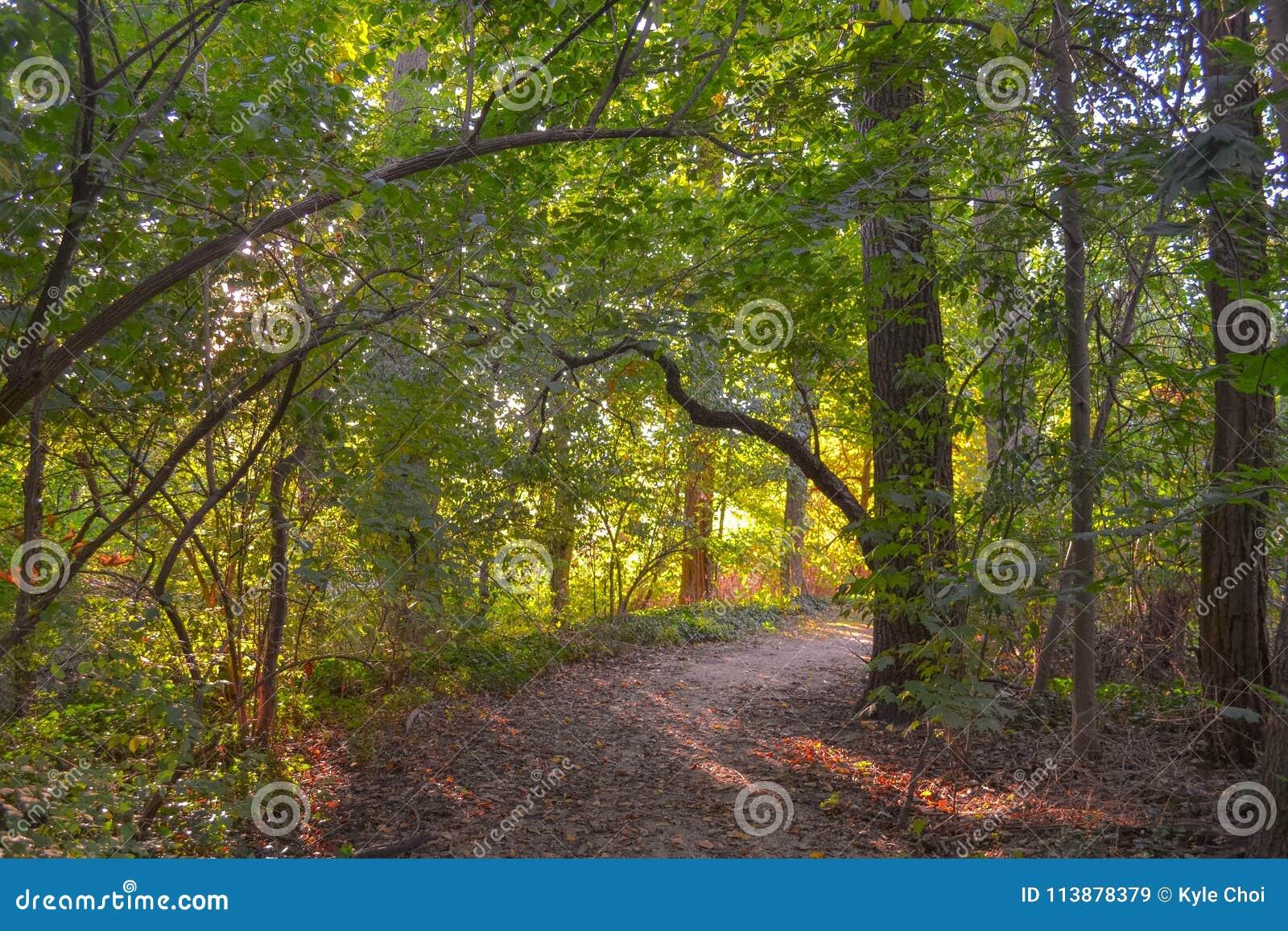 Natur-Traum-Weg im Wald