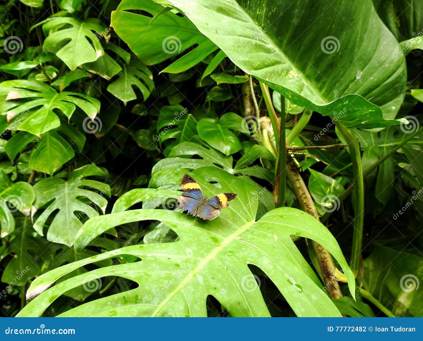 Natura &蝴蝶